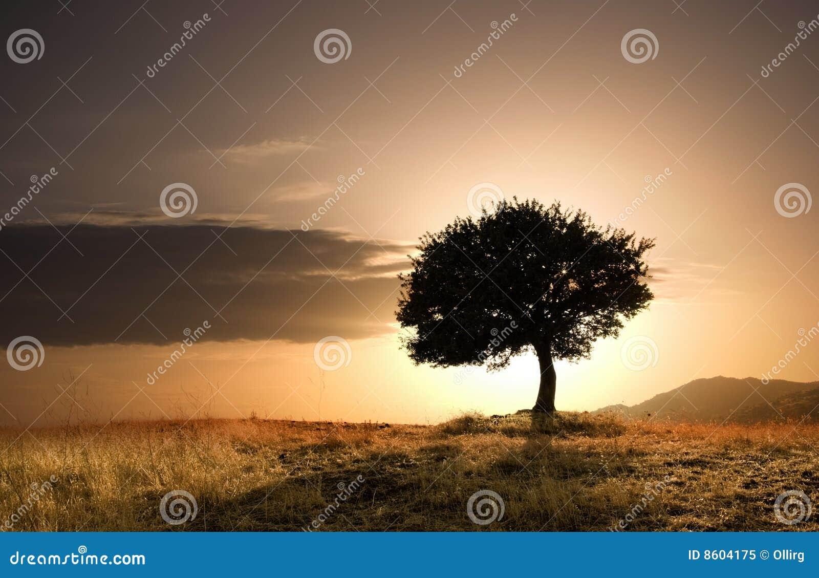 δρύινο απόμερο δέντρο