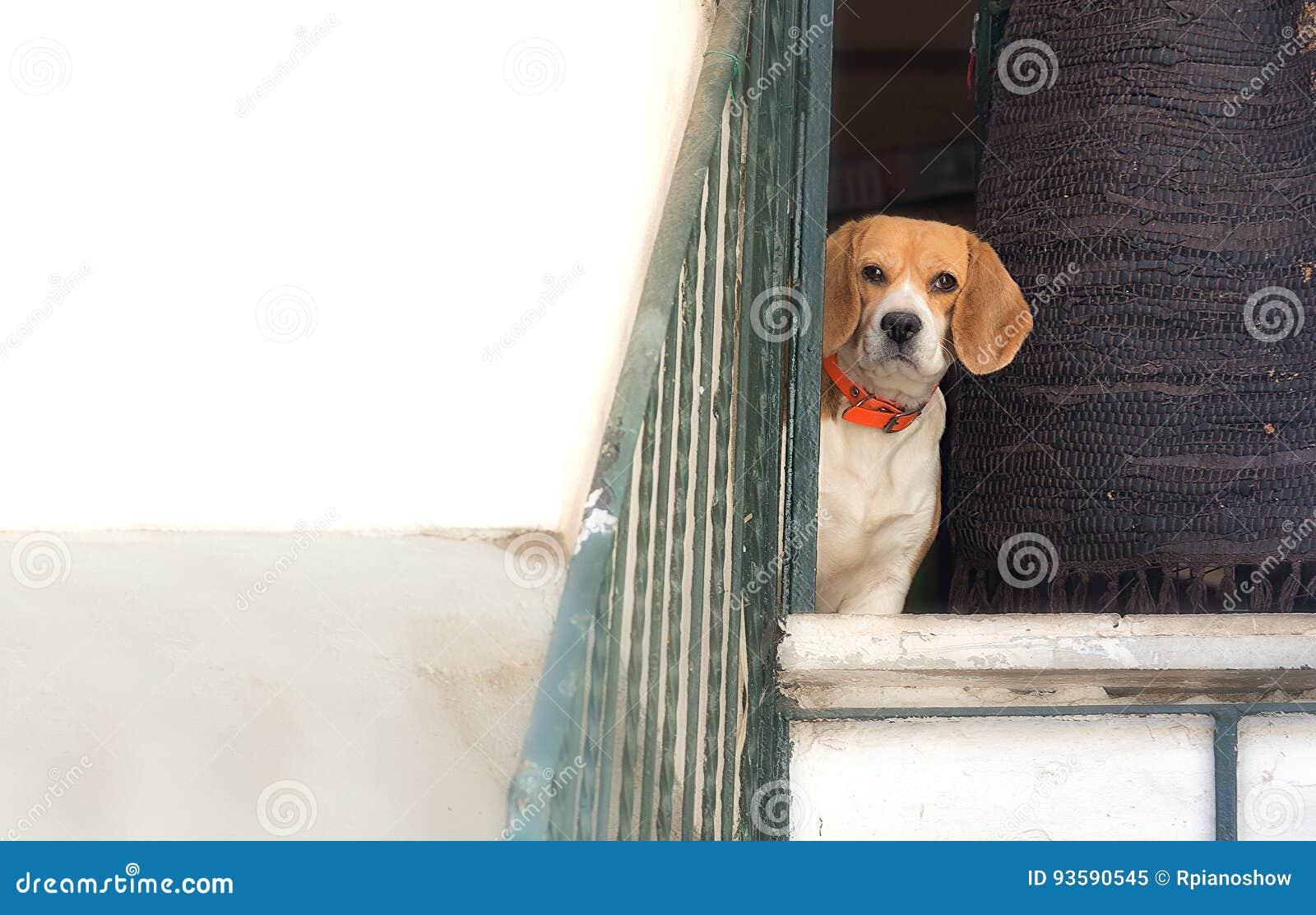 Δυσπιστία σκυλιών