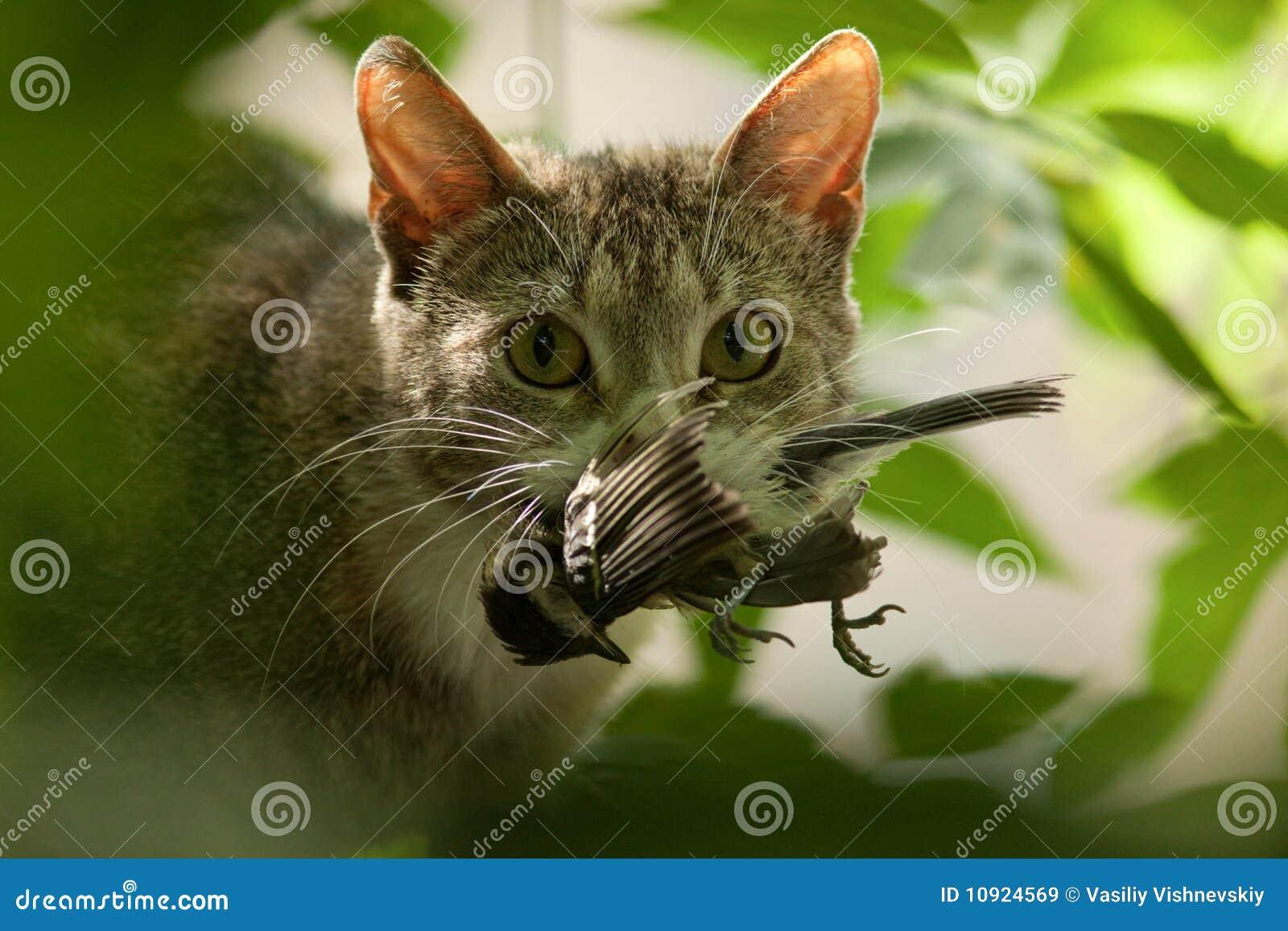 δόντια γατών πουλιών