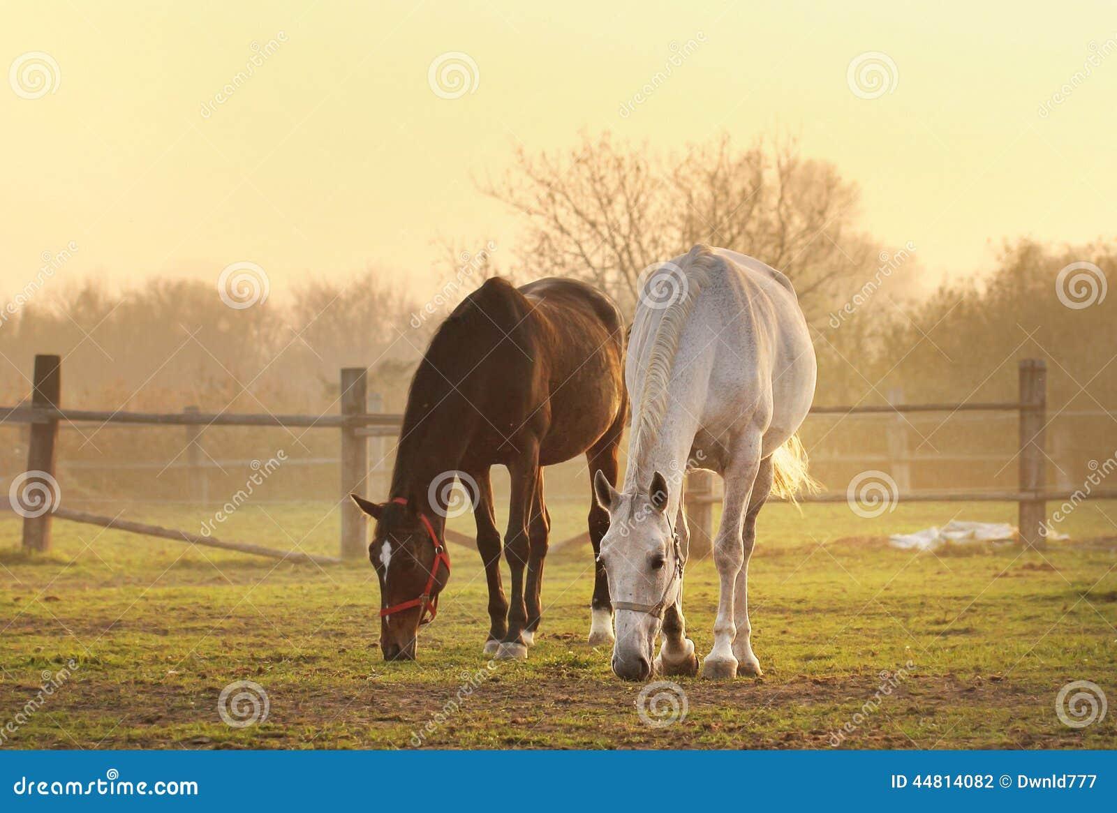 Δύο άλογα στο αγρόκτημα