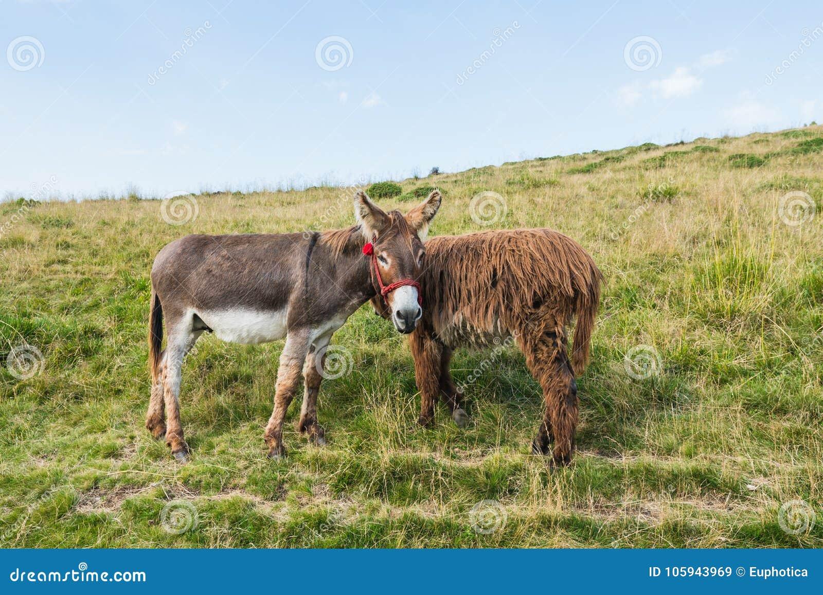Δύο γάιδαροι σε ένα λιβάδι, αντιπαραβαλλόμενη, παράξενη διαμόρφωση, ενδιαφέρουσα ιδέα