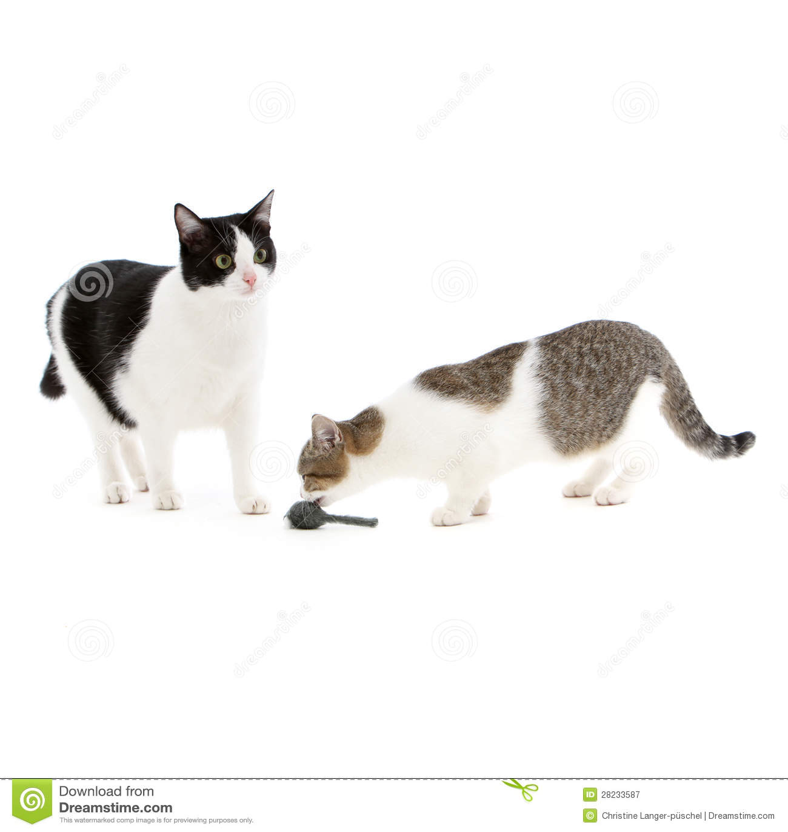 παίζοντας με τη γάτα και το ποντίκι Venus ραντεβού Mars