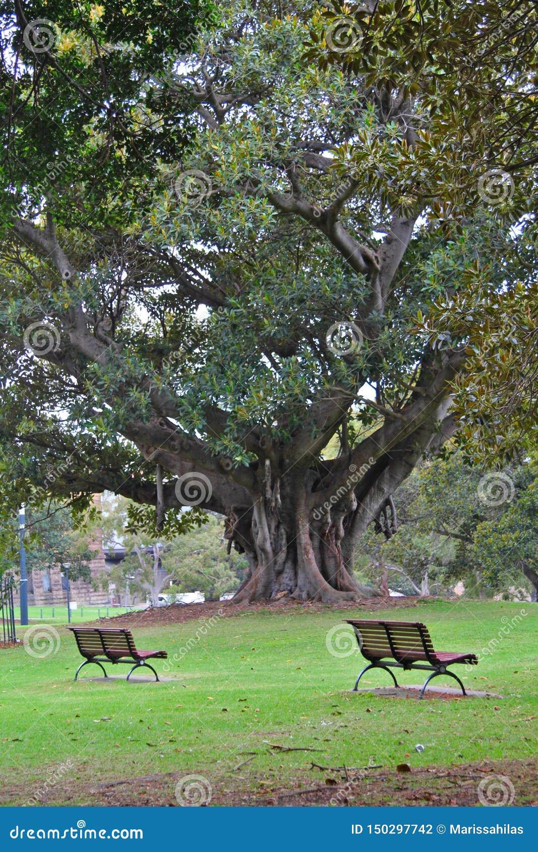 Δύο ειρηνικοί πάγκοι από ένα μεγάλο δέντρο