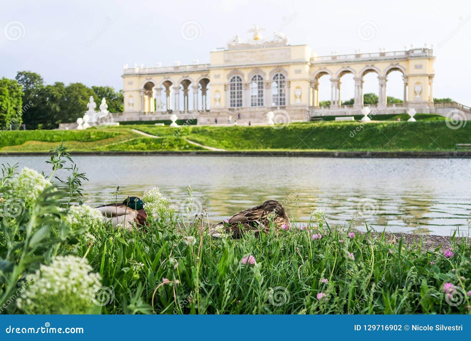 Δύο καλές πάπιες που χαλαρώνουν μπροστά από Kleine Gloriette σε Schön