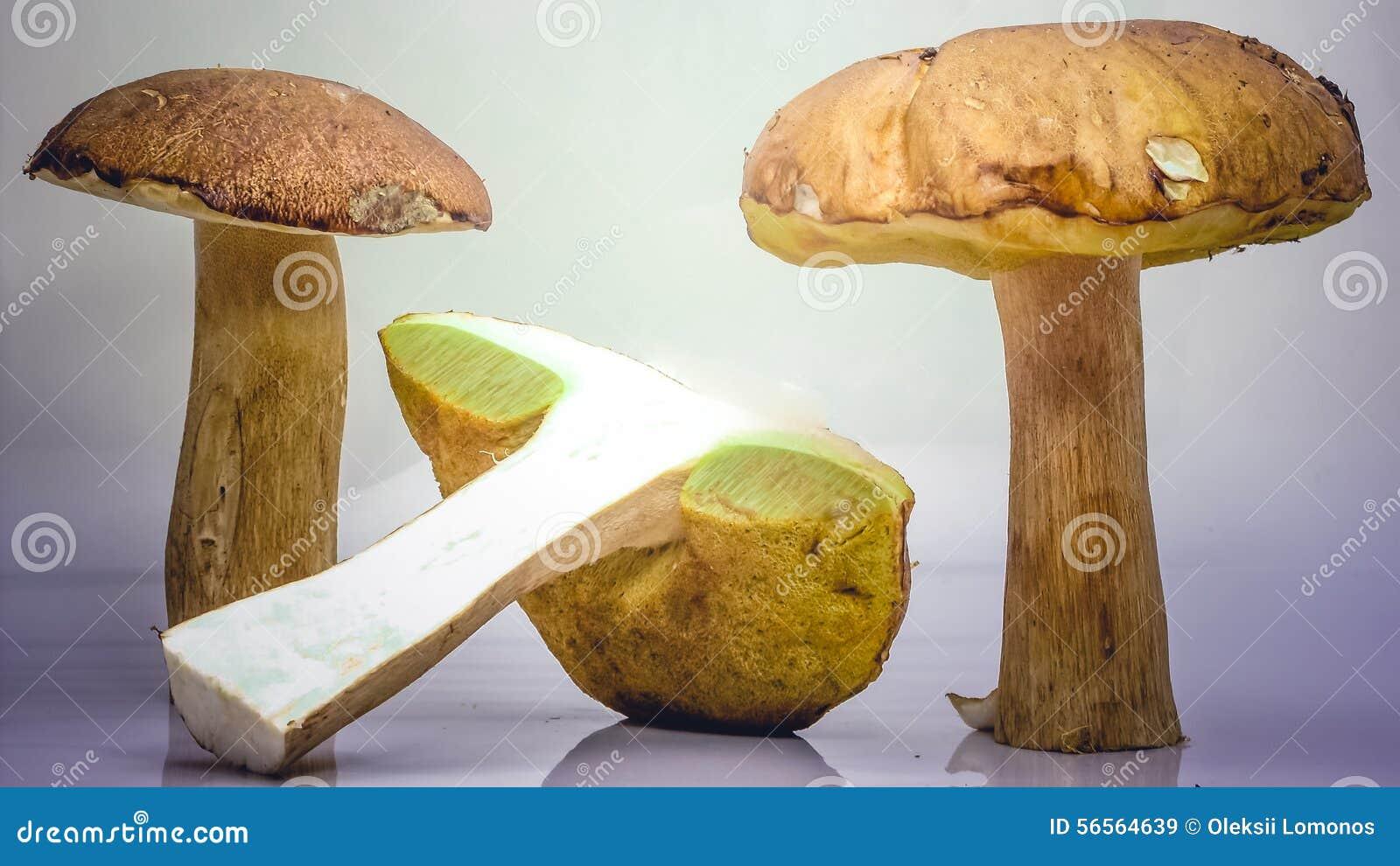 Download Δύο μεγάλα καφετιά Boletus μανιτάρια που τεμαχίζονται Στοκ Εικόνα - εικόνα από μανιτάρι, δύο: 56564639