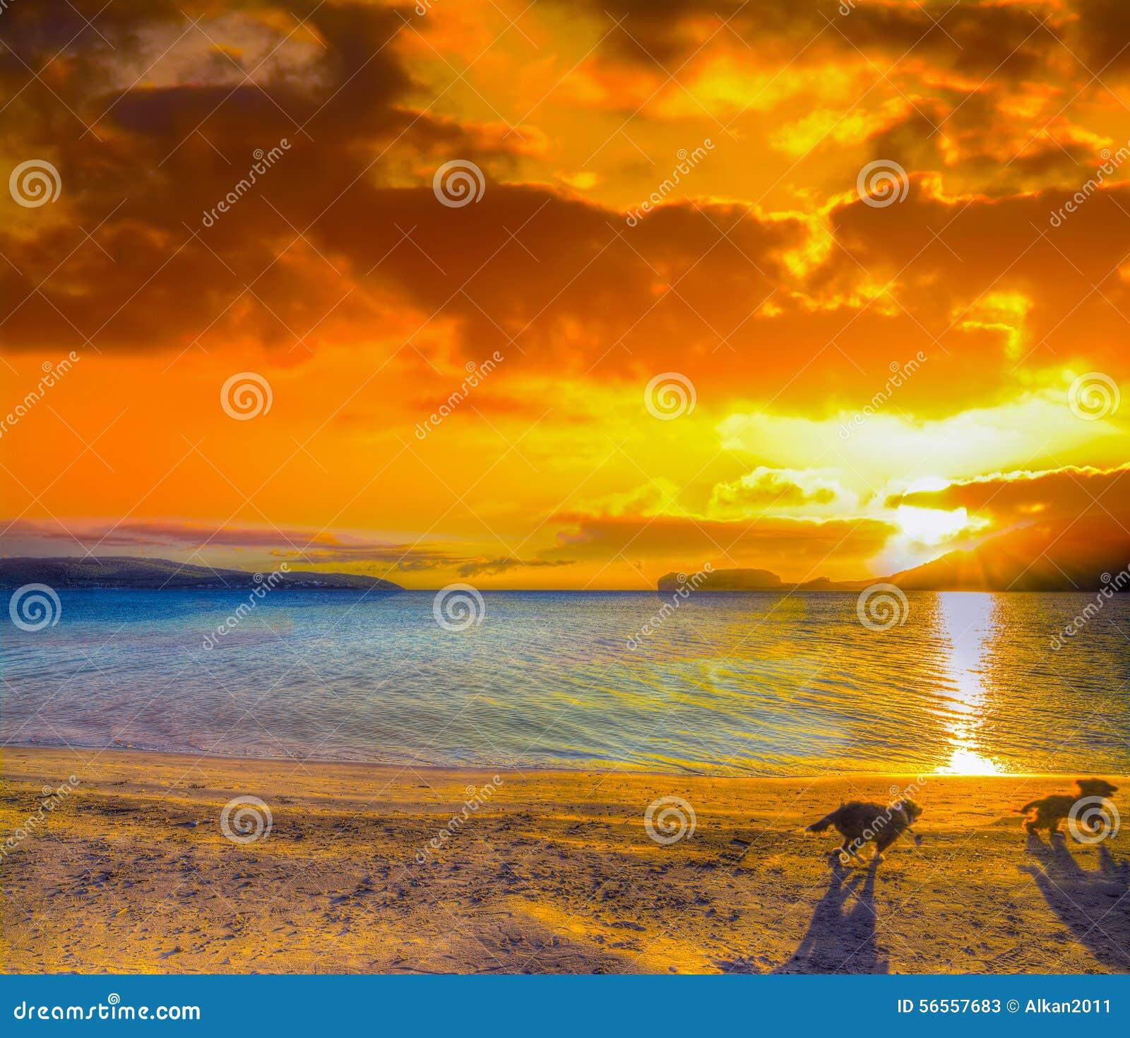 Download Δύο μικρά σκυλιά που τρέχουν στην παραλία στο ηλιοβασίλεμα Στοκ Εικόνα - εικόνα από dusk, έξυπνο: 56557683