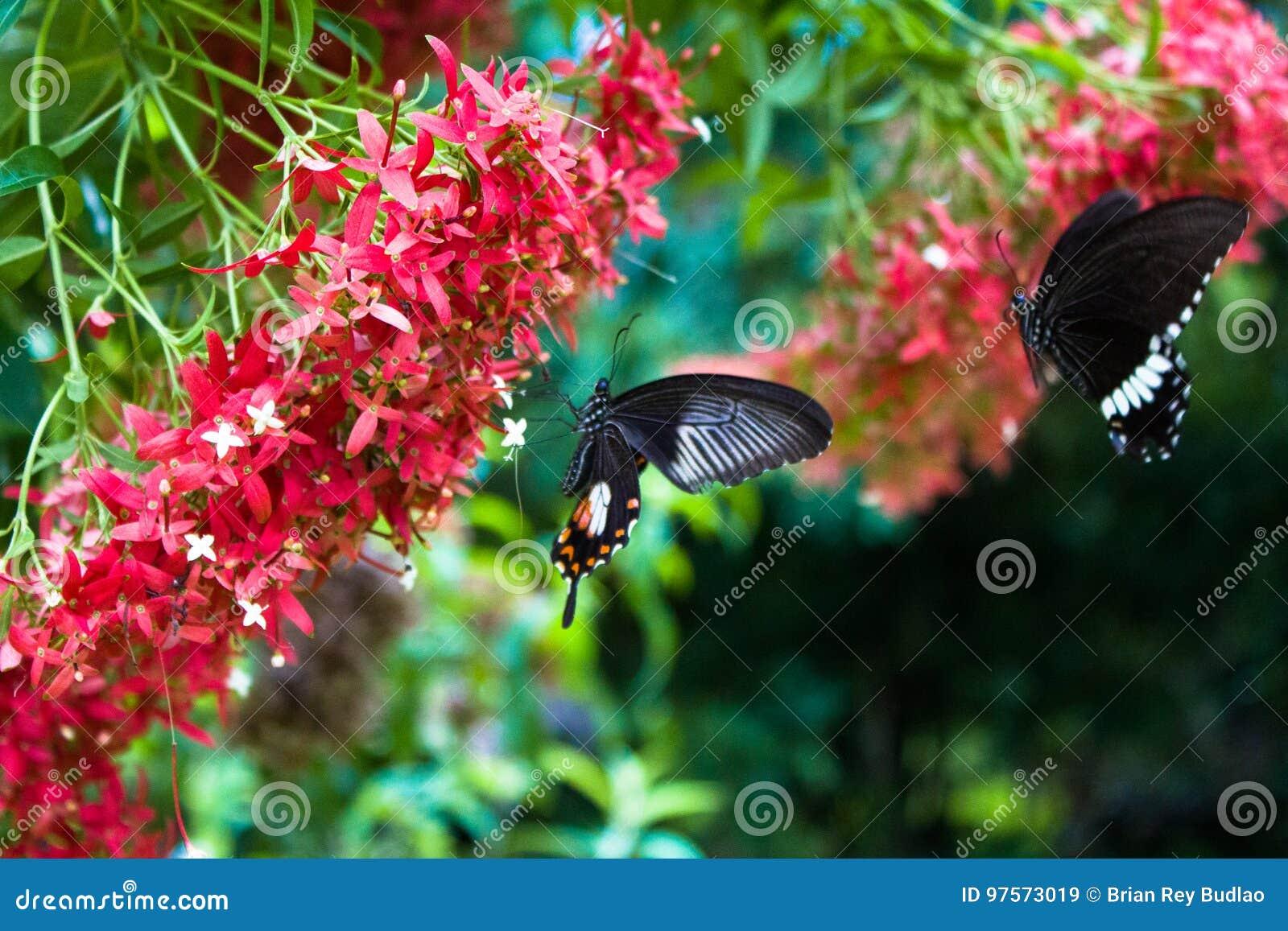Δύο πεταλούδες με τα κόκκινα λουλούδια