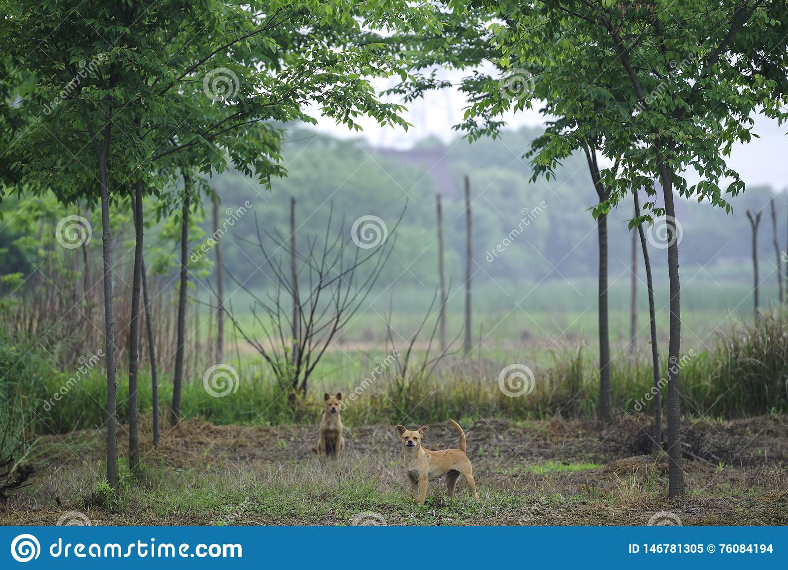 Δύο σκυλιά στη δασώδη περιοχή