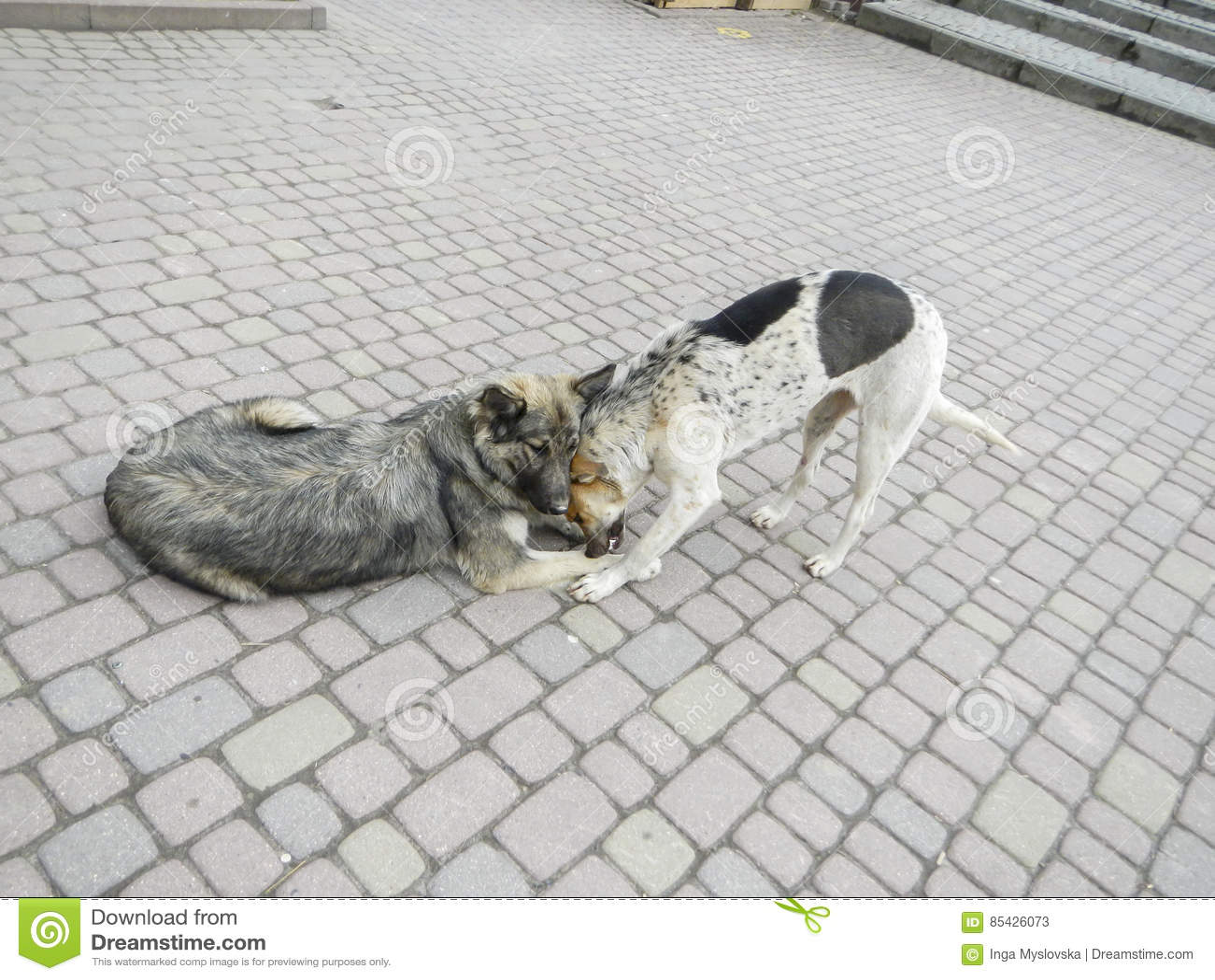 Δύο σκυλιά σε μια άσφαλτο