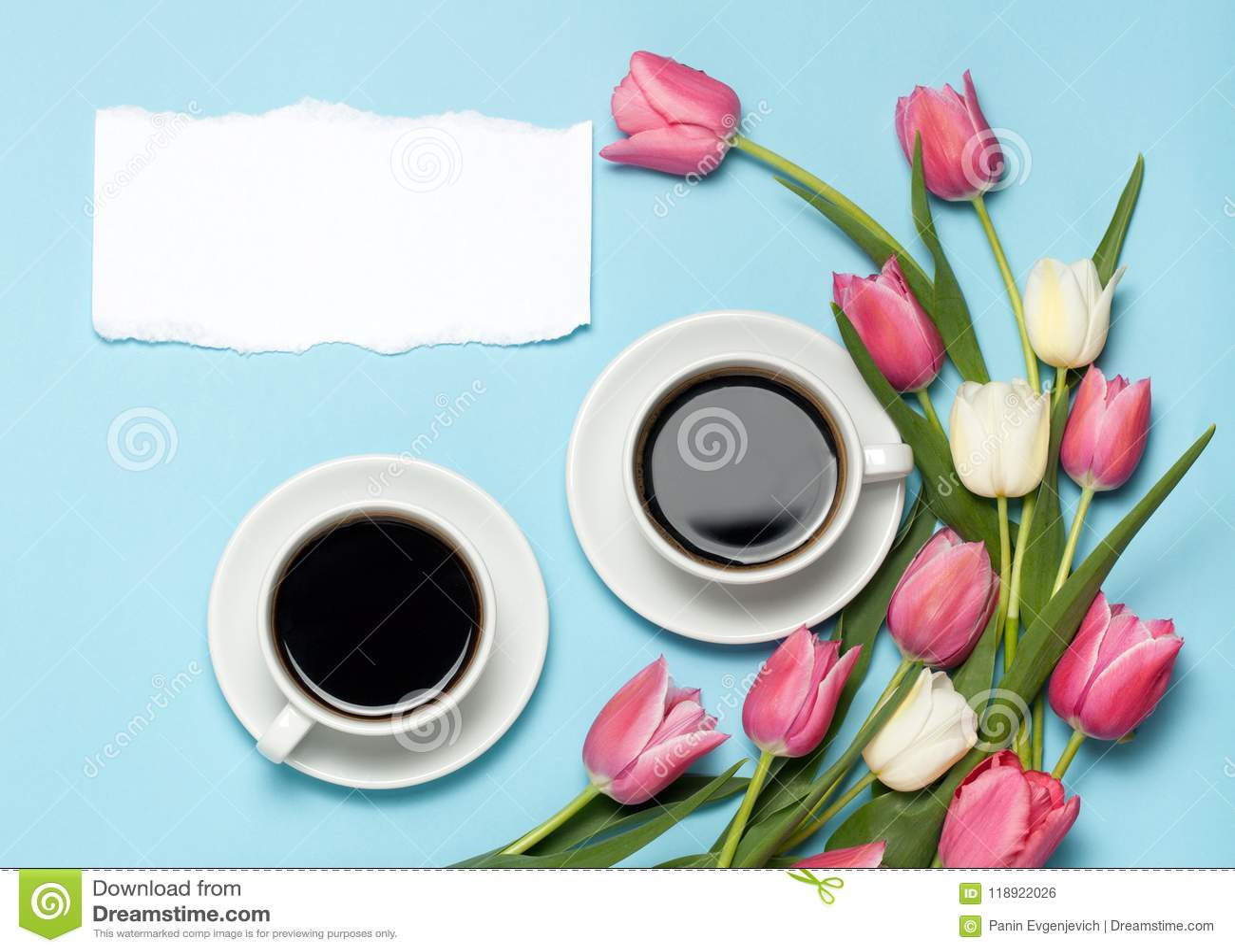 Δύο φλυτζάνια του coffe και των ρόδινων τουλιπών στο μπλε υπόβαθρο