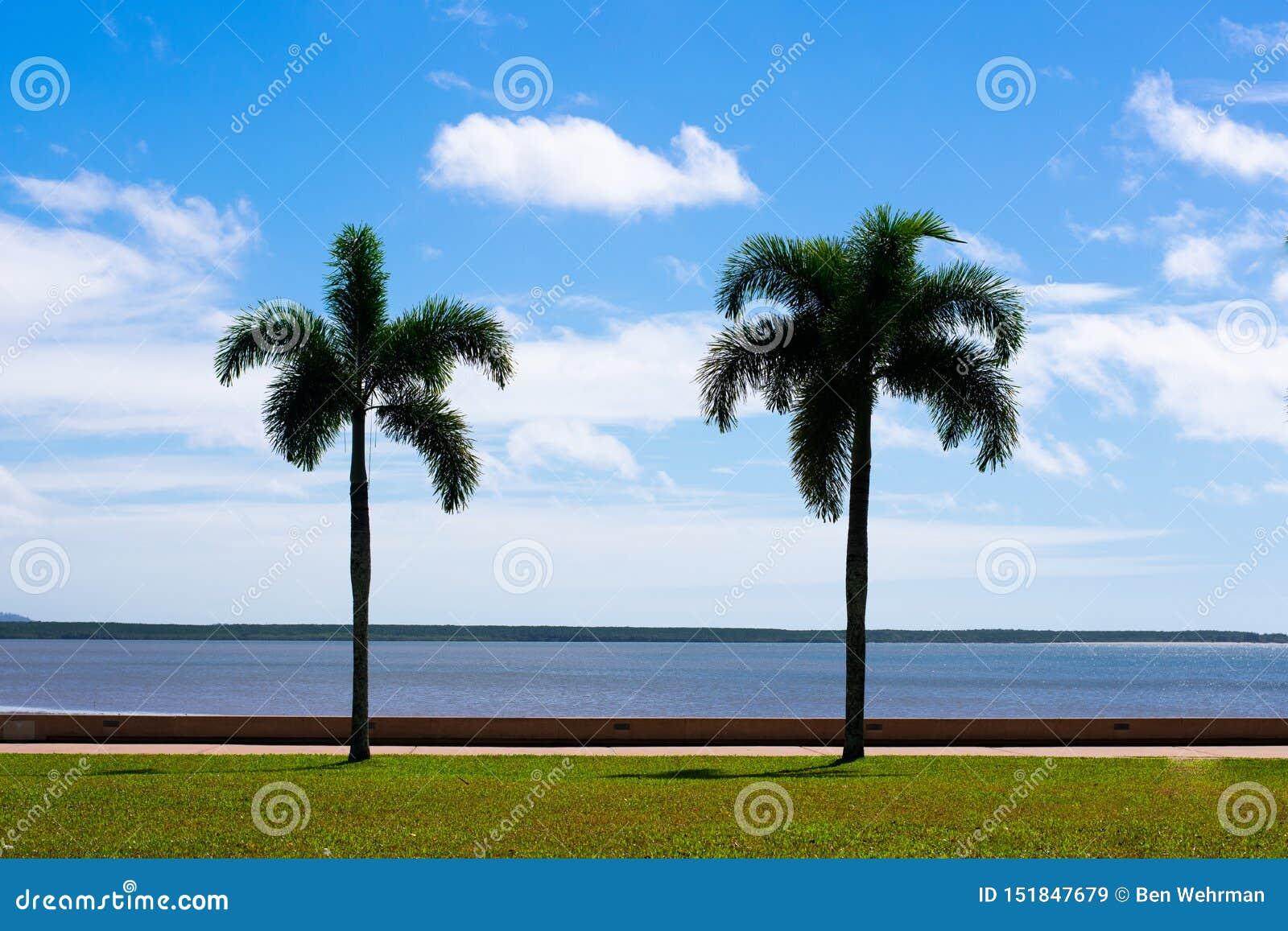 Δύο φοίνικες στην παραλία