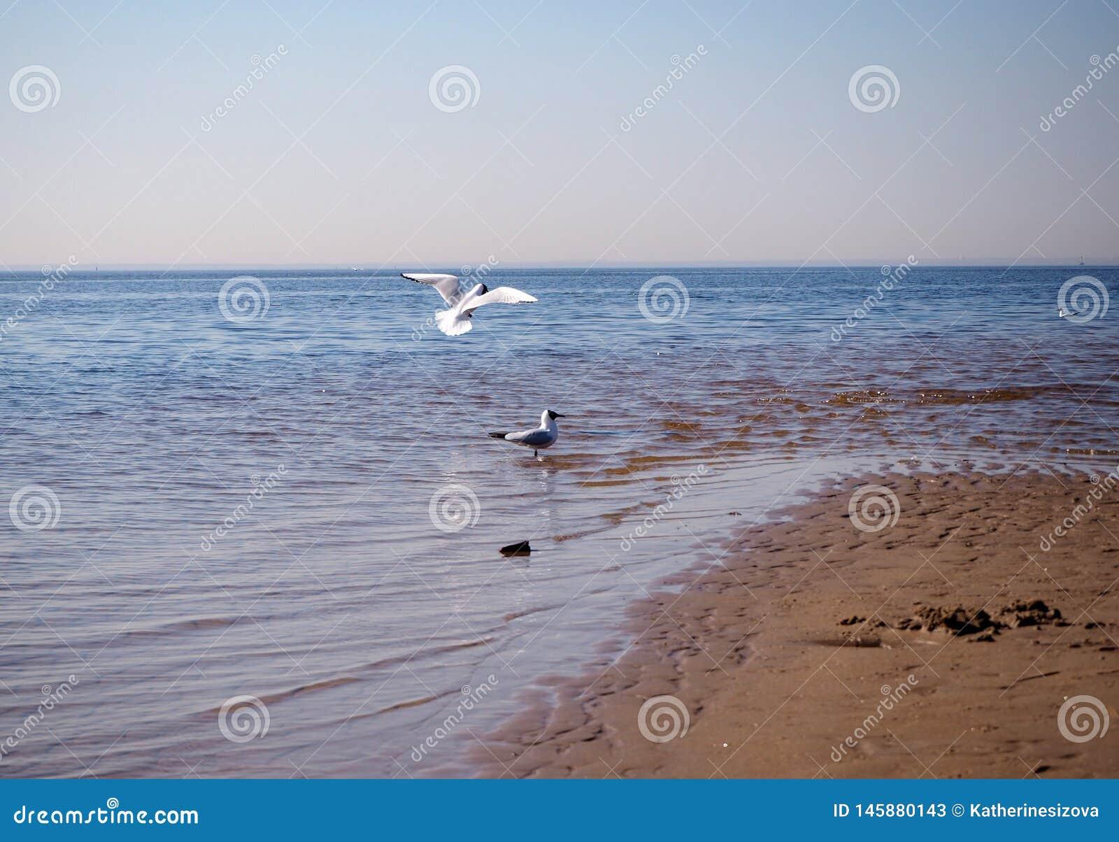 Δύο seagulls στην παραλία
