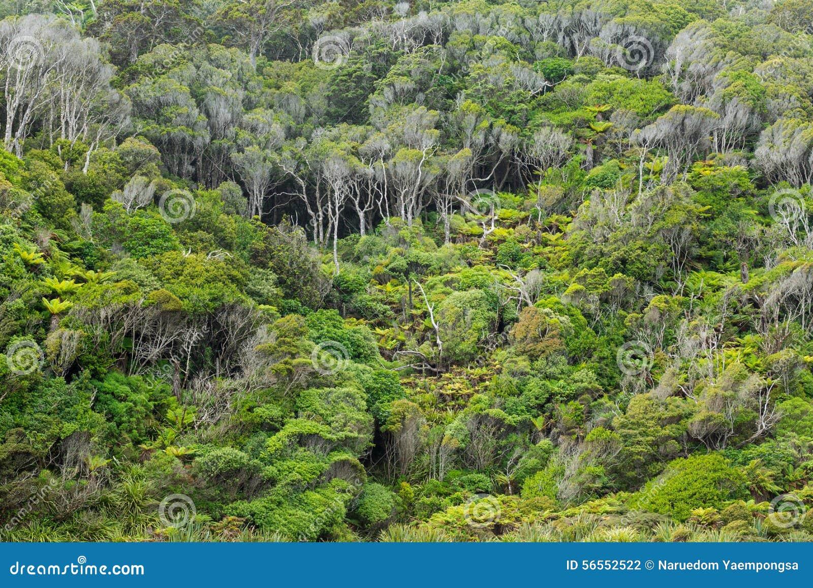 Download Εγγενής θάμνος της Νέας Ζηλανδίας Στοκ Εικόνες - εικόνα από πράσινος, φύλλωμα: 56552522