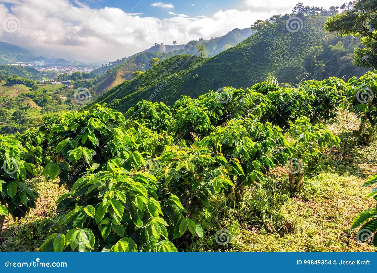 Εγκαταστάσεις και λόφοι καφέ