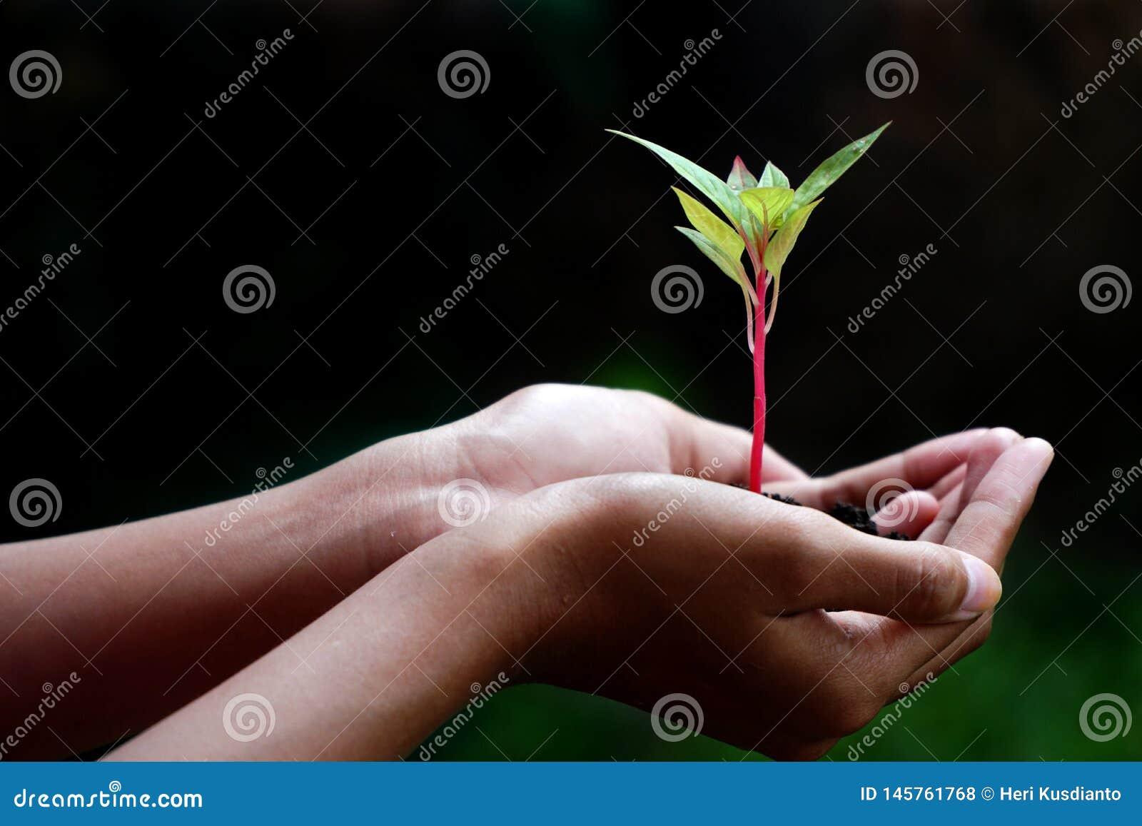 Εγκαταστάσεις στα χέρια, ανθρώπινες νέες εγκαταστάσεις εκμετάλλευσης χεριών