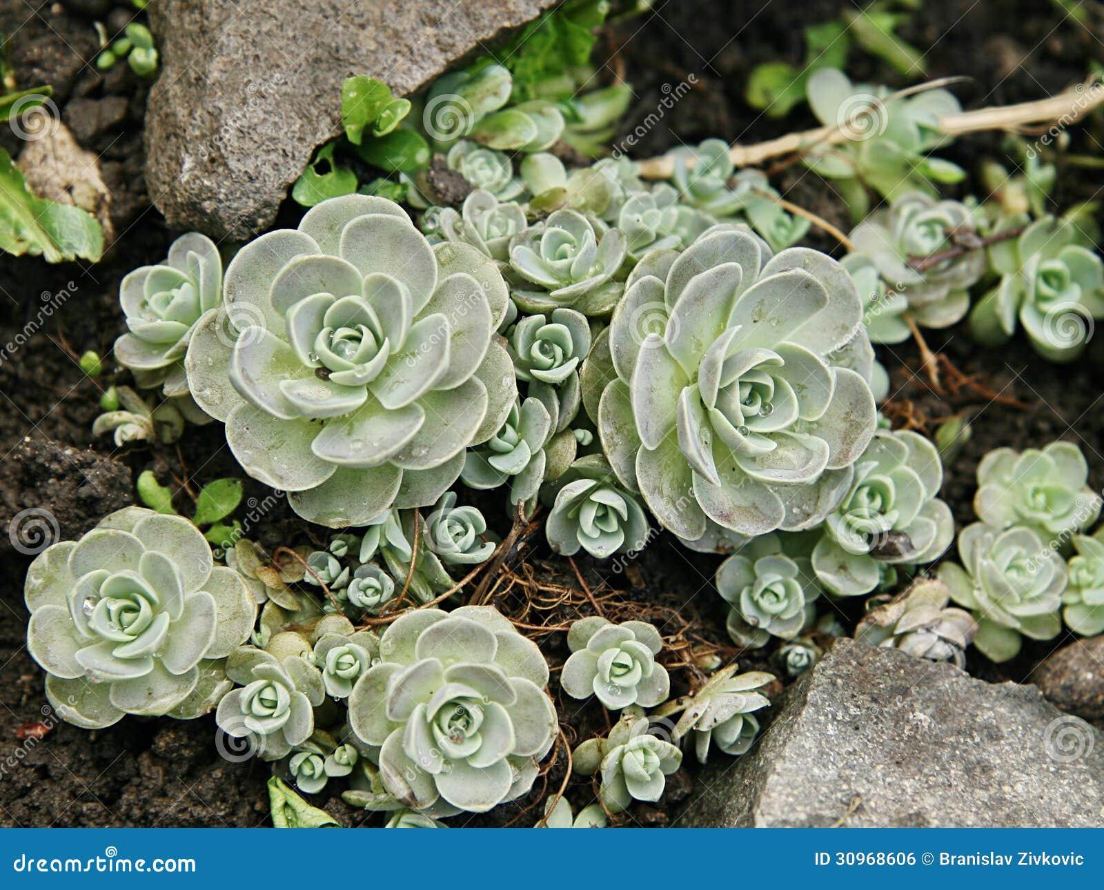 Εγκαταστάσεις succulents-διακοσμήσεων