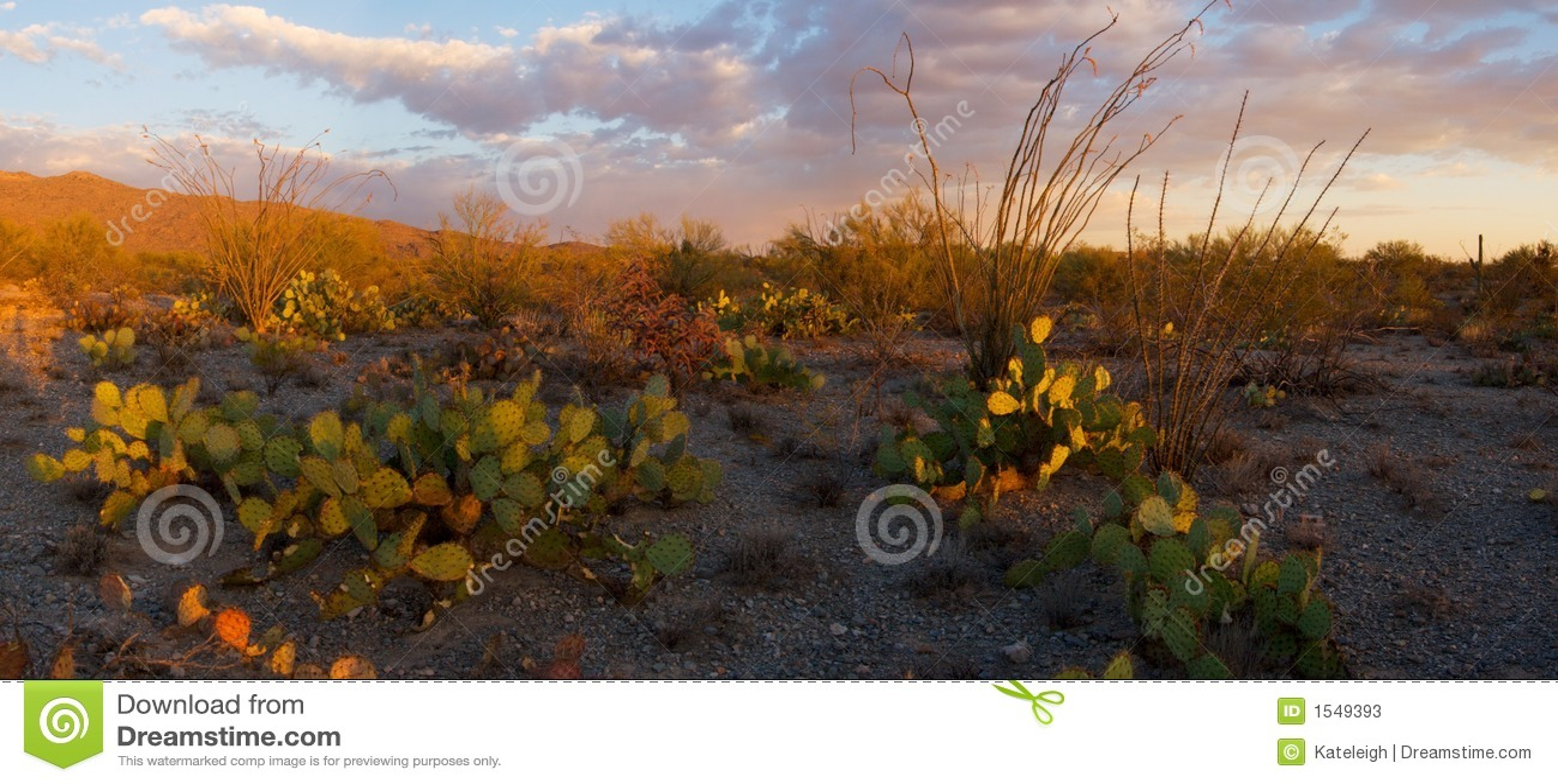 εθνικό ηλιοβασίλεμα saguaro μνημείων