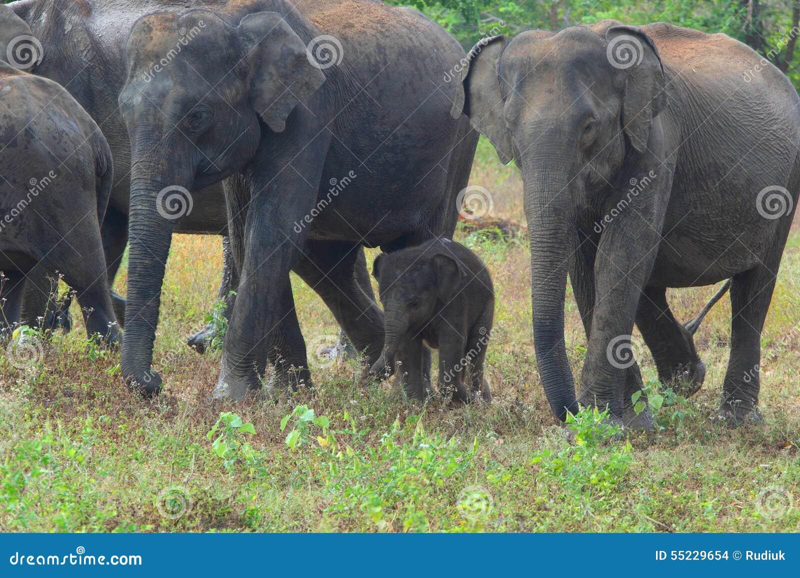εθνικό πάρκο της οικογενειακής Κένυας ελεφάντων amboseli