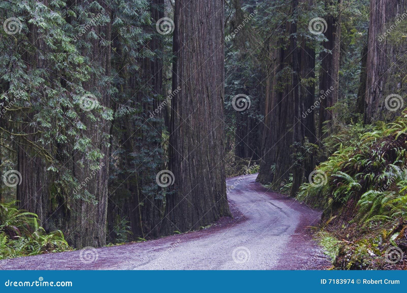 εθνικό πάρκο redwood redwoods