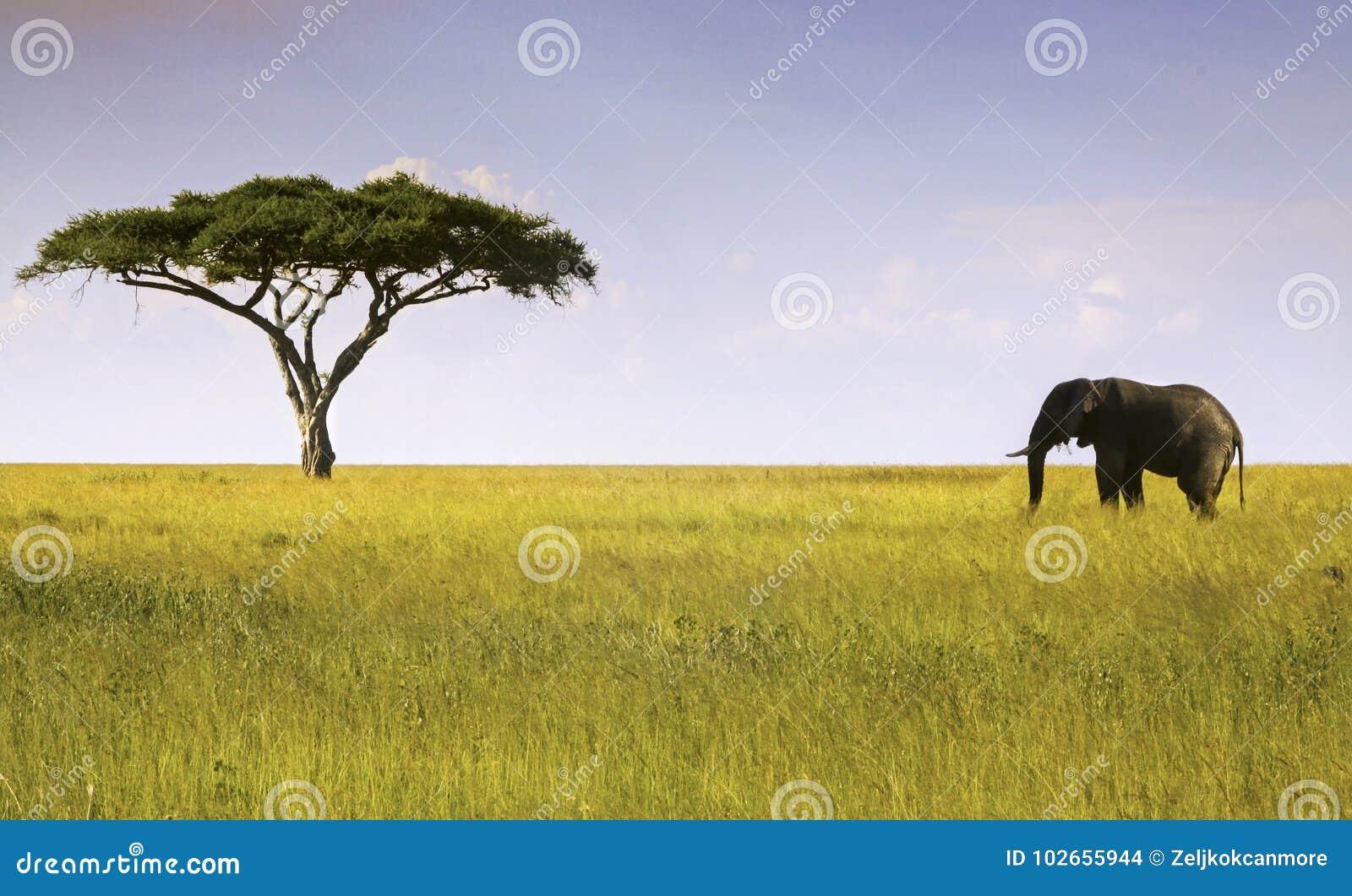 Εθνικό πάρκο Serengeti δέντρων ελεφάντων και ακακιών
