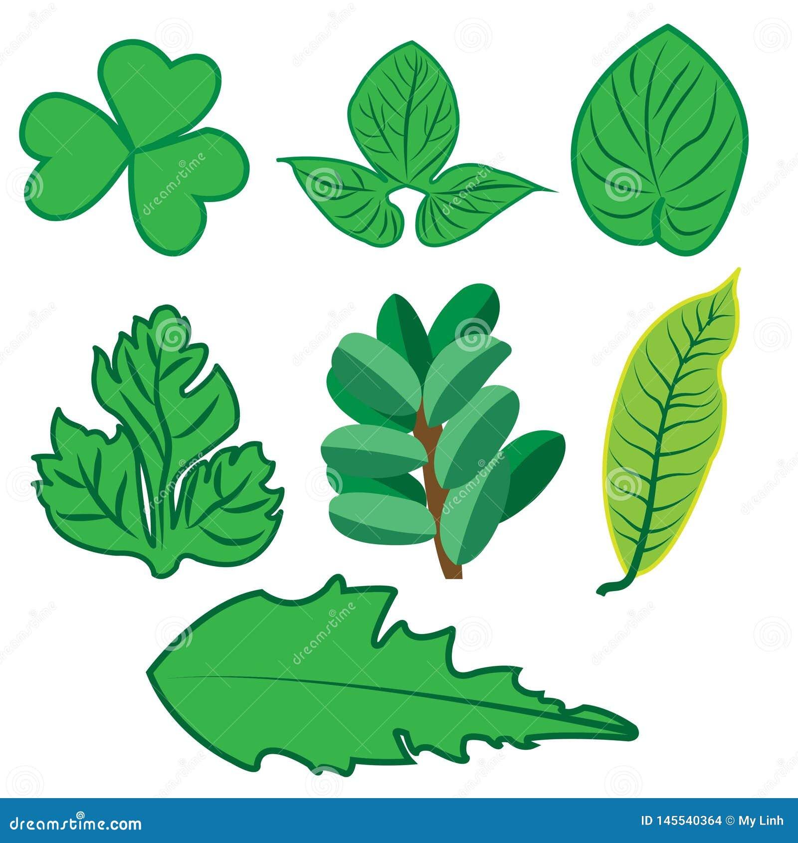 Εικονίδια Ιστού, διανυσματικά, τροπικά φύλλα φύλλων