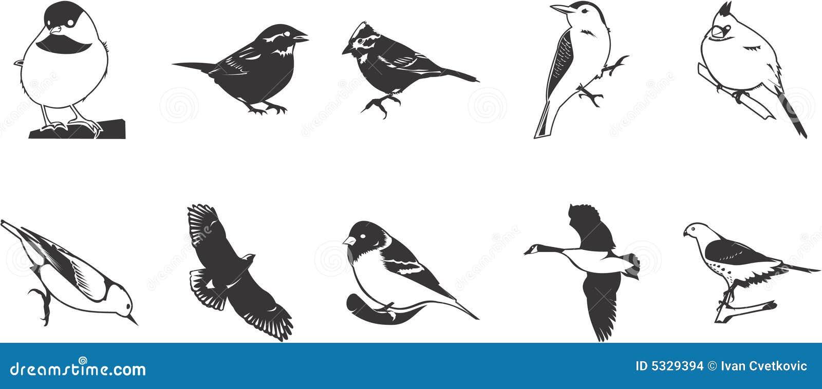 αγαπά το μαύρο πουλίμεγάλο πουλί γαμημένο Έφηβος