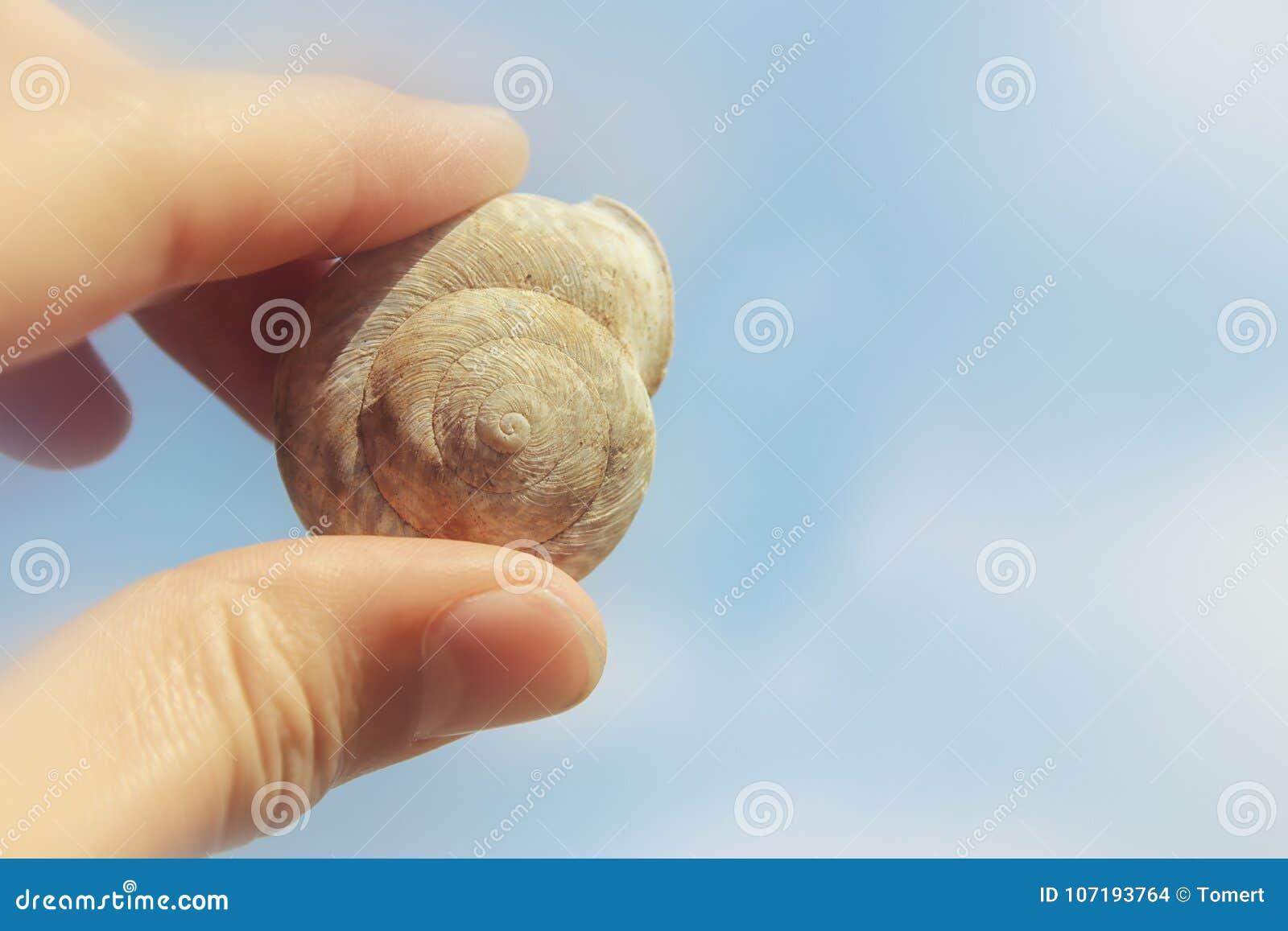 Εικόνα ammonite εκμετάλλευσης ατόμων του απολιθώματος