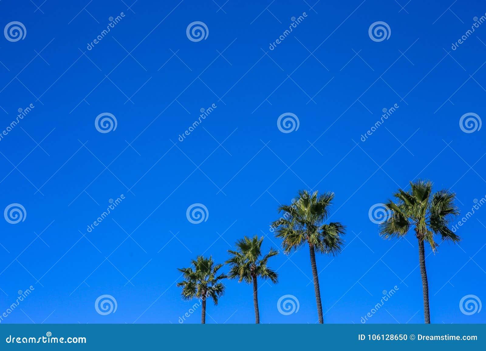 Εικόνα Minimalistic τεσσάρων φοινίκων, μπλε ζωηρός ουρανός