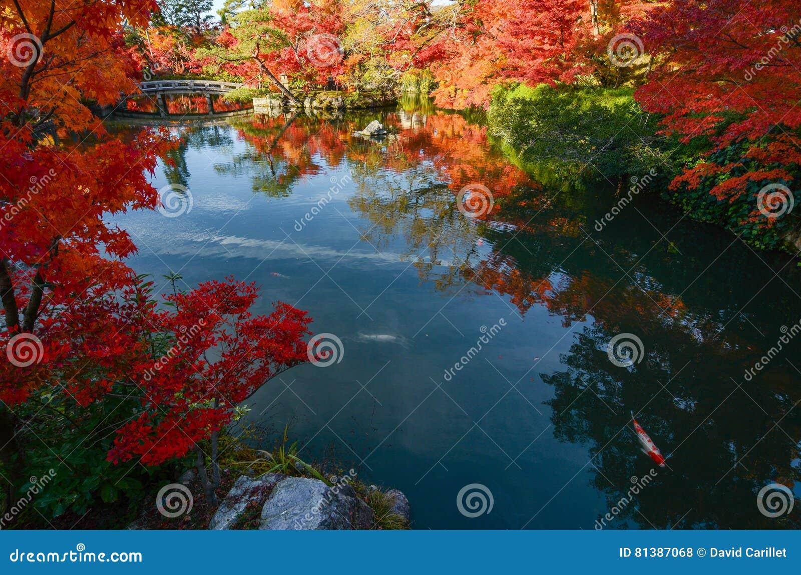 Ειρηνικός ιαπωνικός κήπος λιμνών το φθινόπωρο με τα κόκκινα δέντρα σφενδάμνου στο πλήρες χρώμα πτώσης