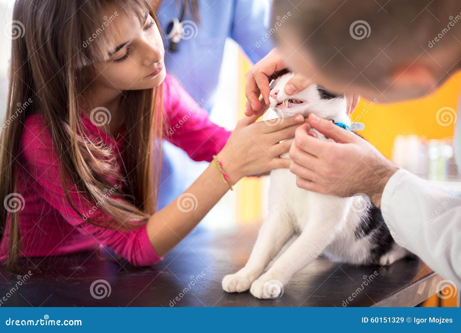 Ειδικός κτηνιάτρων που ελέγχει το στόμα και τα δόντια της γάτας στην κλινική κτηνιάτρων