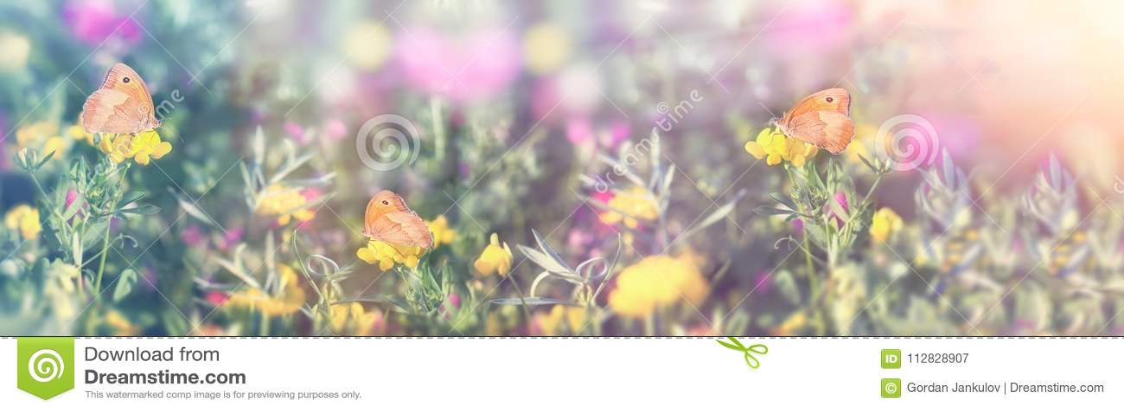 Εκλεκτική εστίαση σε λίγη πεταλούδα - πεταλούδες, όμορφο λιβάδι την άνοιξη