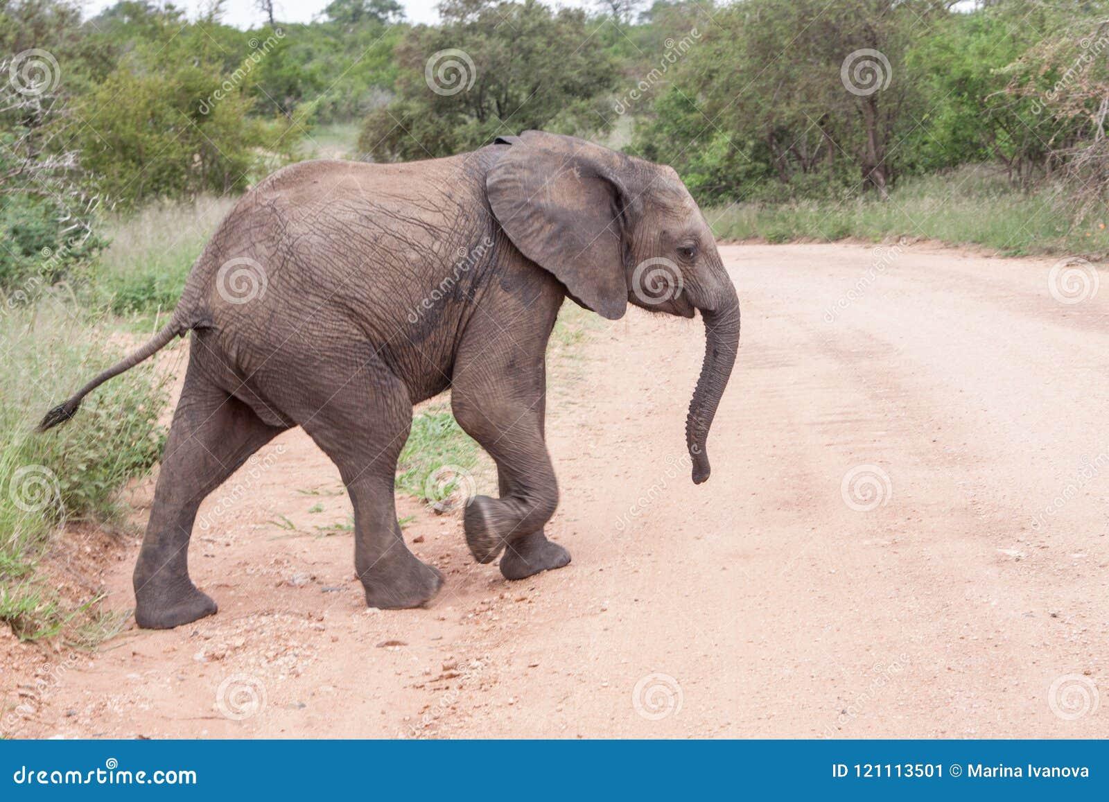 Ελέφαντας μωρών που διασχίζει το δρόμο