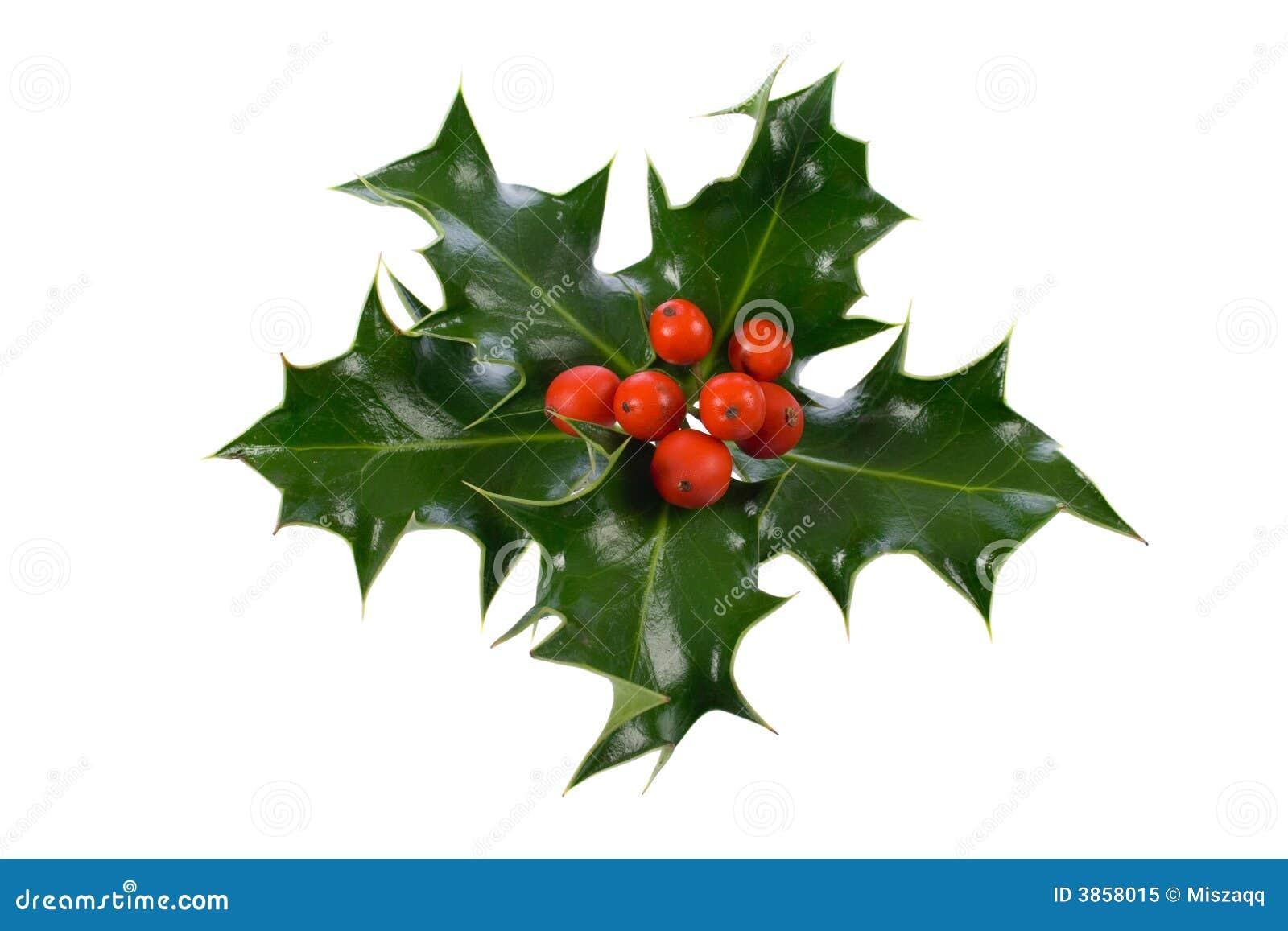 ελαιόπρινος διακοσμήσεων Χριστουγέννων ilex
