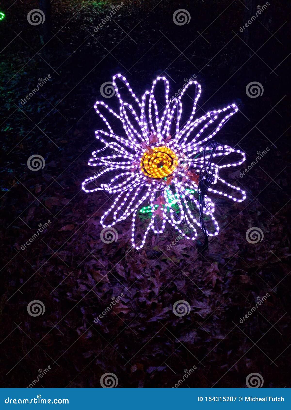 Ελαφρύ λουλούδι Χριστουγέννων Garvin
