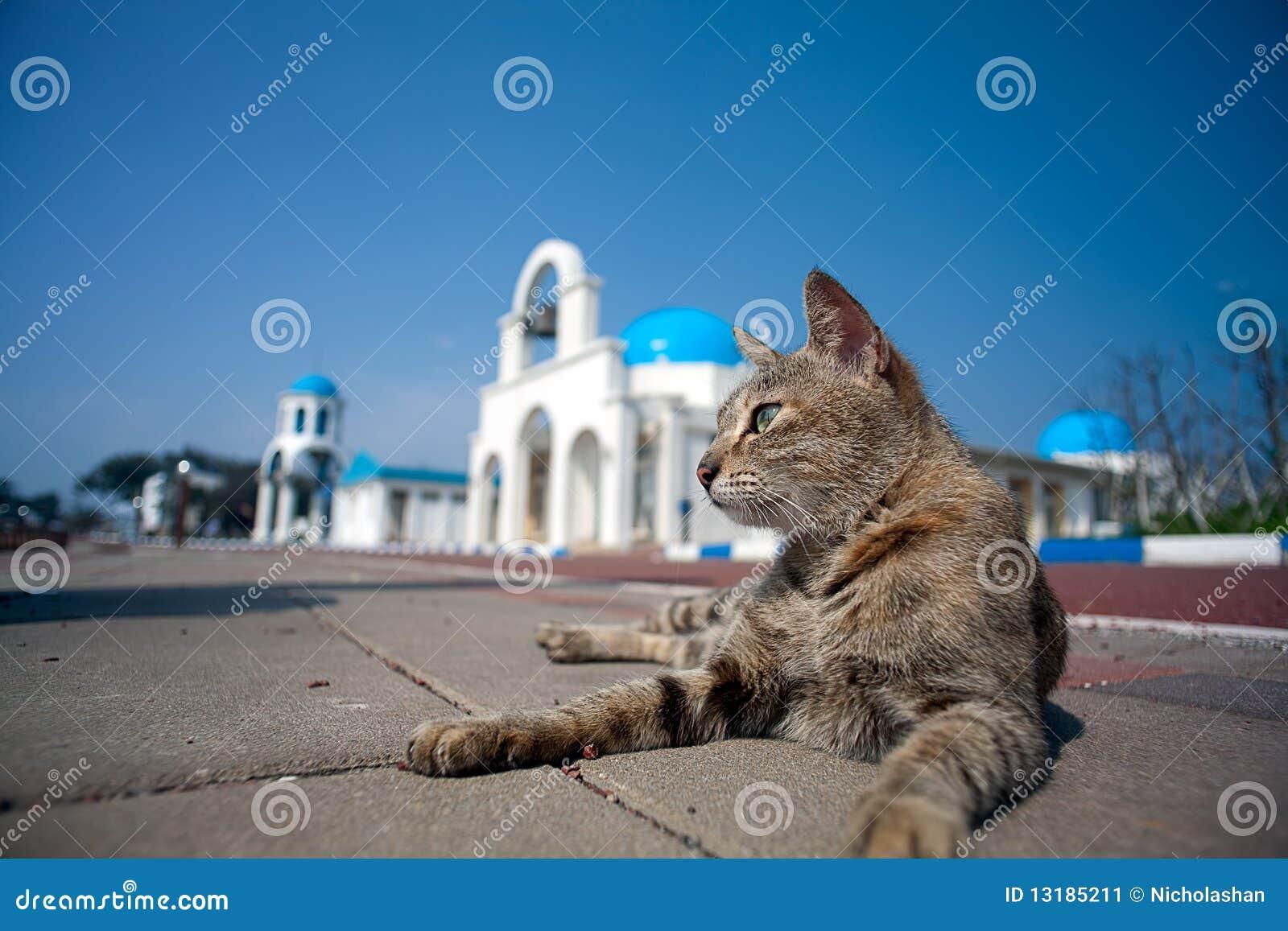 ελληνικός ουρανός γατών &alp