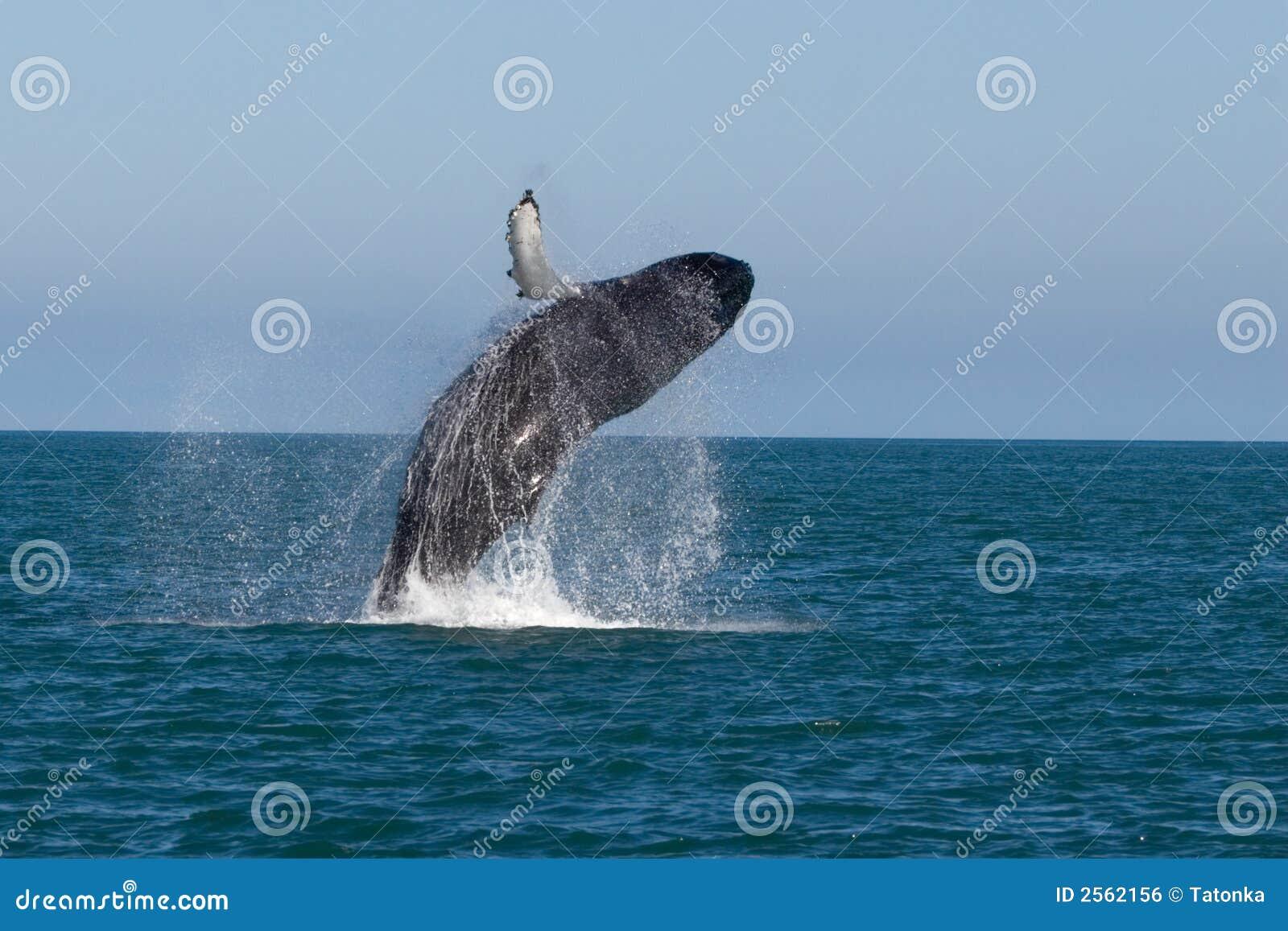 εμφανίστε φάλαινα