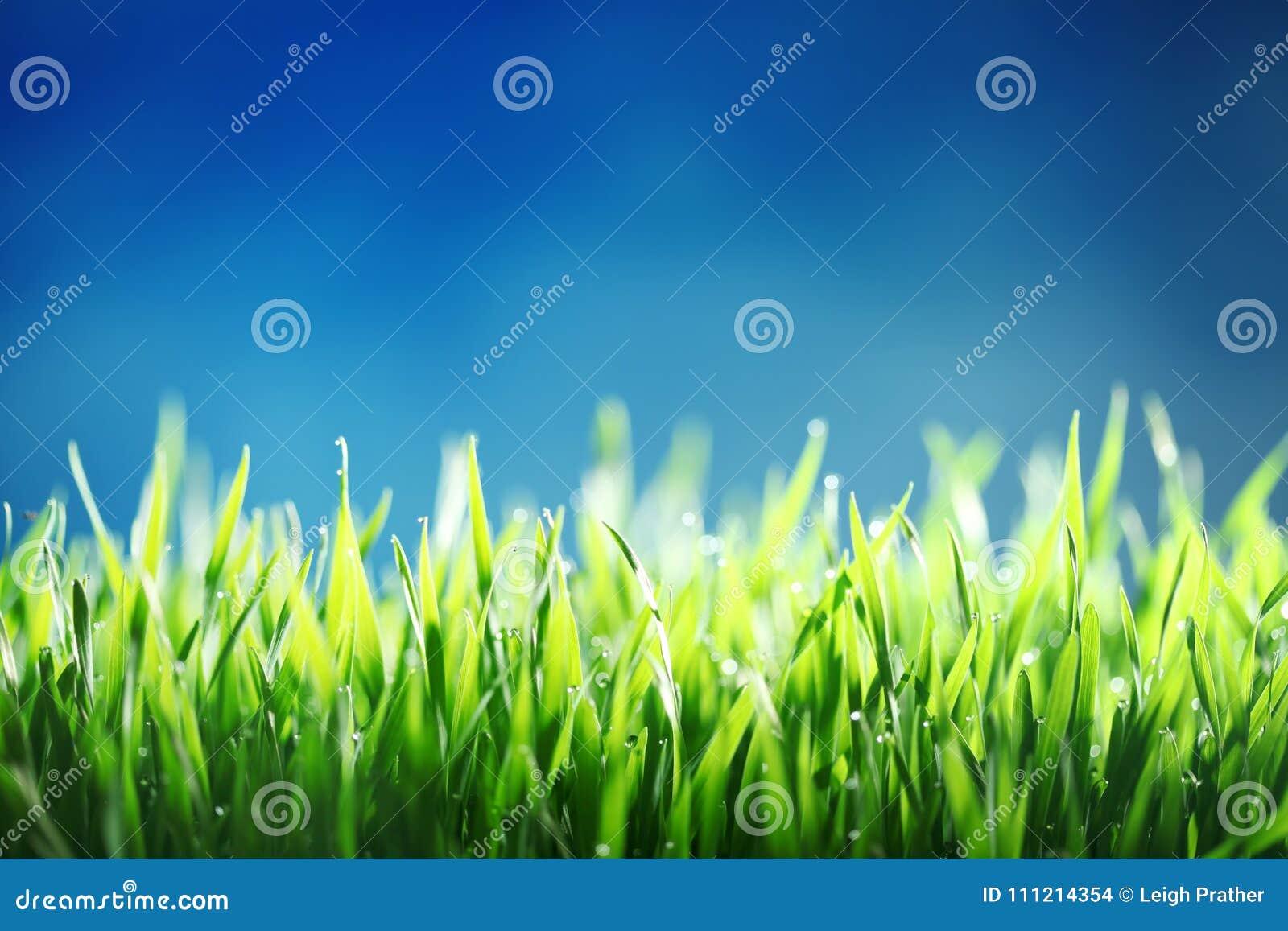 ενάντια πράσινο ουρανό χλόη&