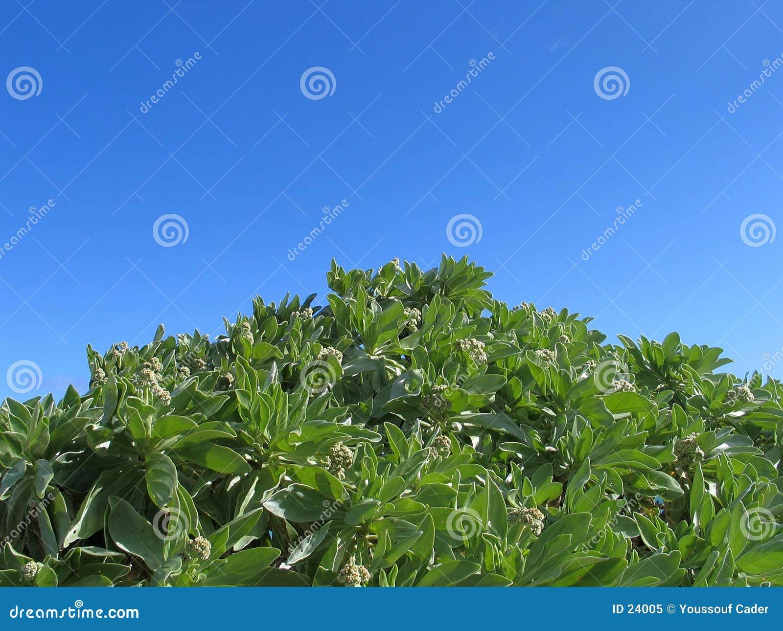 ενάντια στον ουρανό φυτών