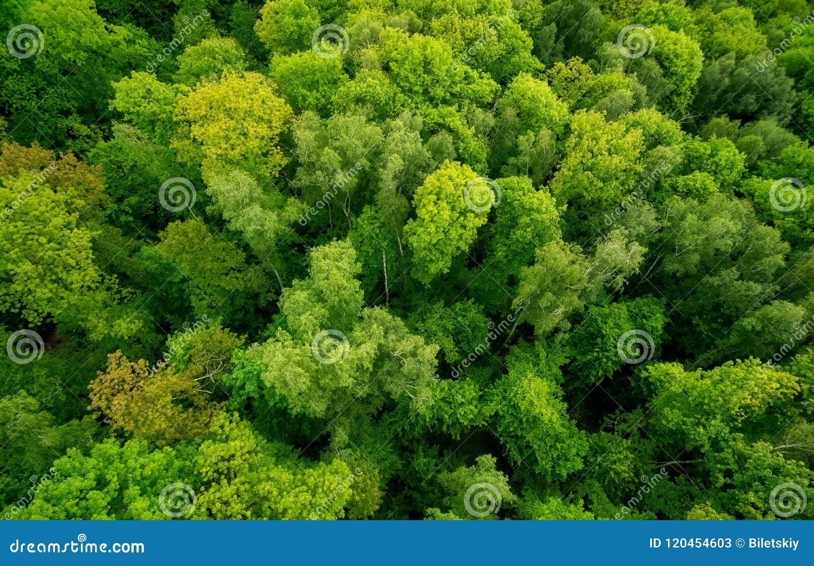 Εναέρια άποψη ο το δάσος