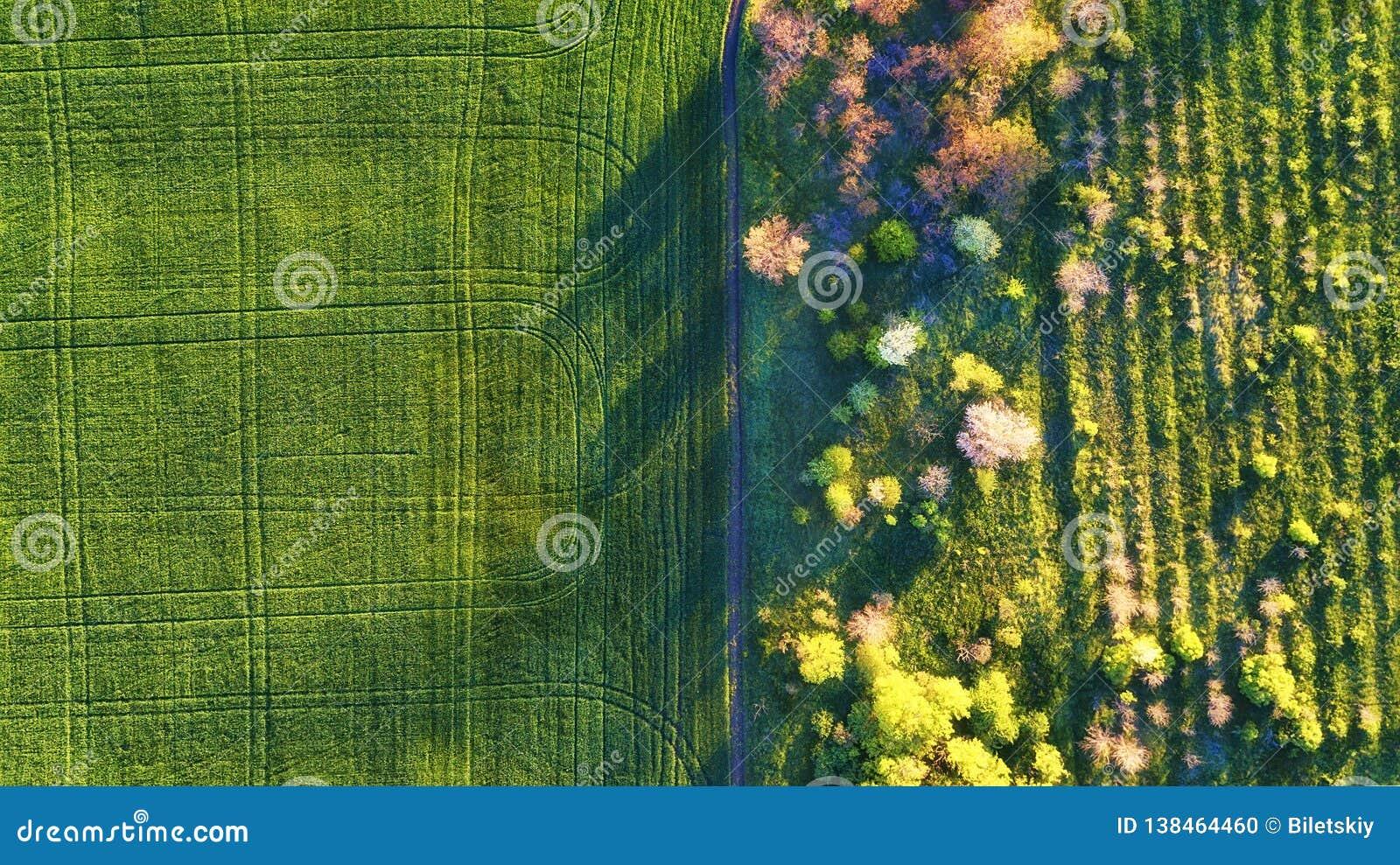 Εναέρια άποψη στον κήπο και τον τομέα Γεωργικό τοπίο από τον αέρα Τομέας και κήπος Αγρόκτημα στο θερινό χρόνο Φωτογραφία κηφήνων