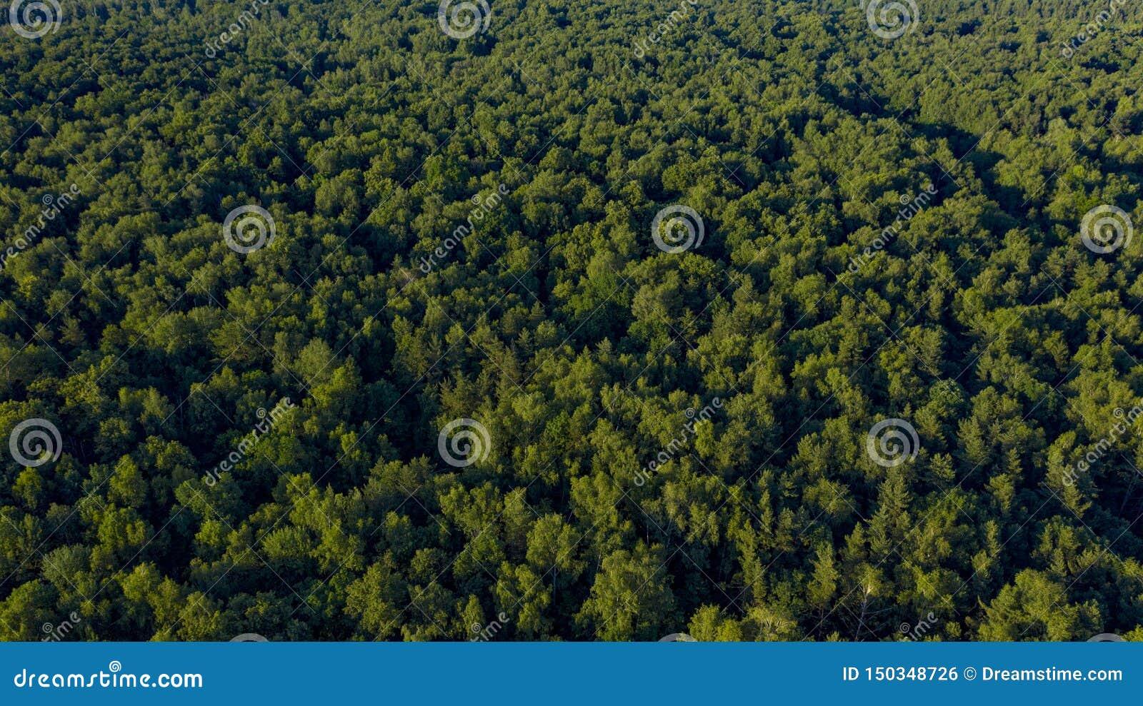 Εναέρια άποψη των πράσινων δέντρων στο ηλιοβασίλεμα