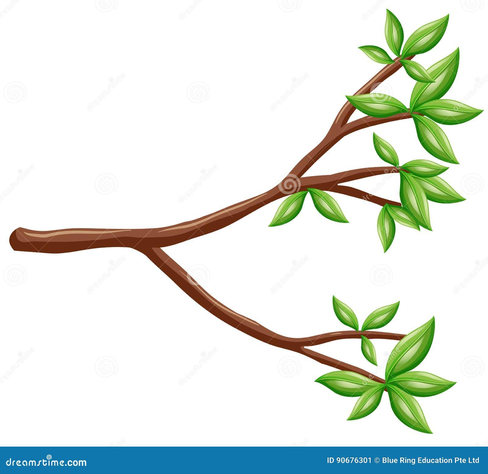 Ενιαίος κλάδος με τα πράσινα φύλλα