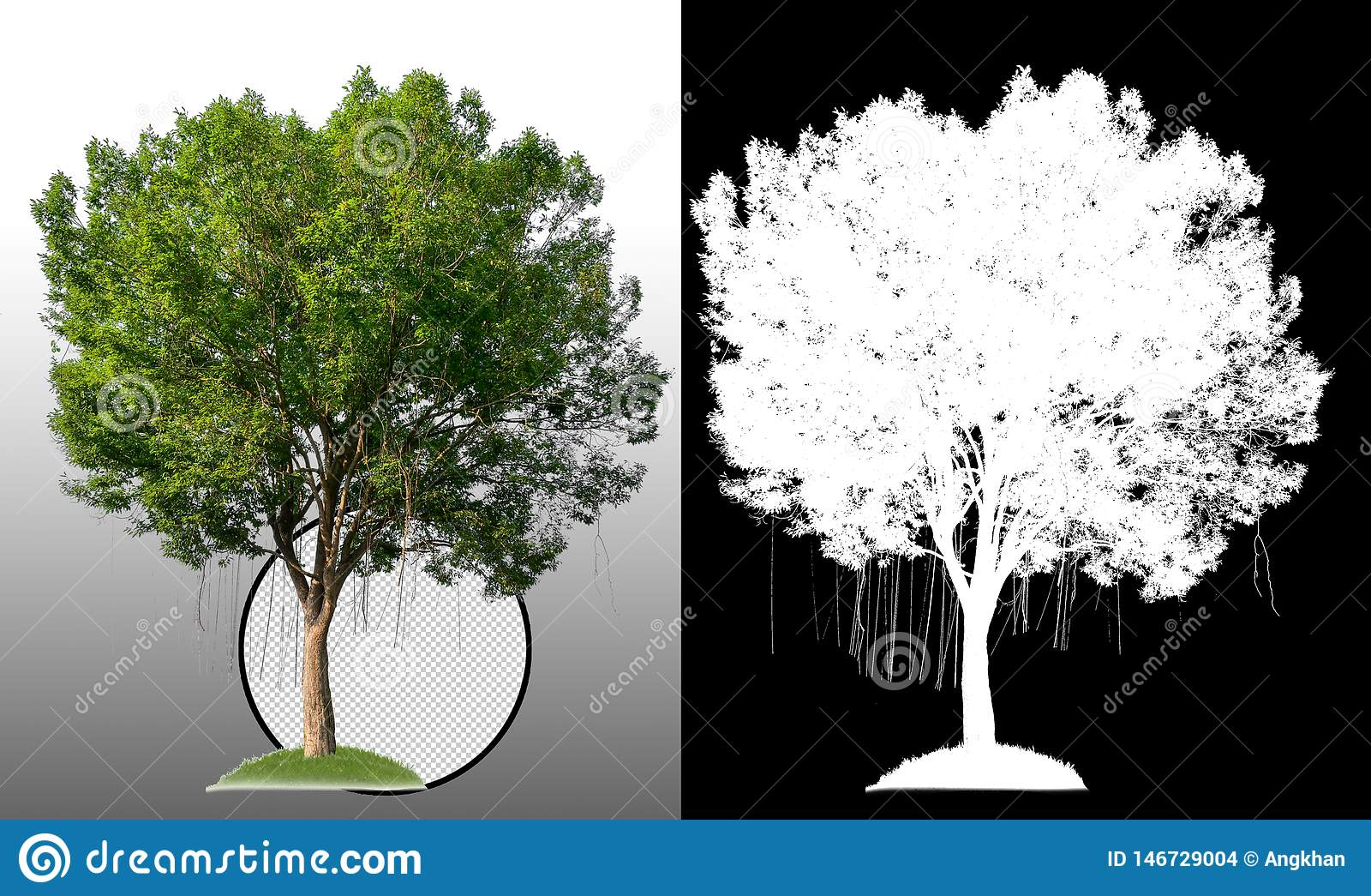 Ενιαίο δέντρο με το ψαλίδισμα της πορείας