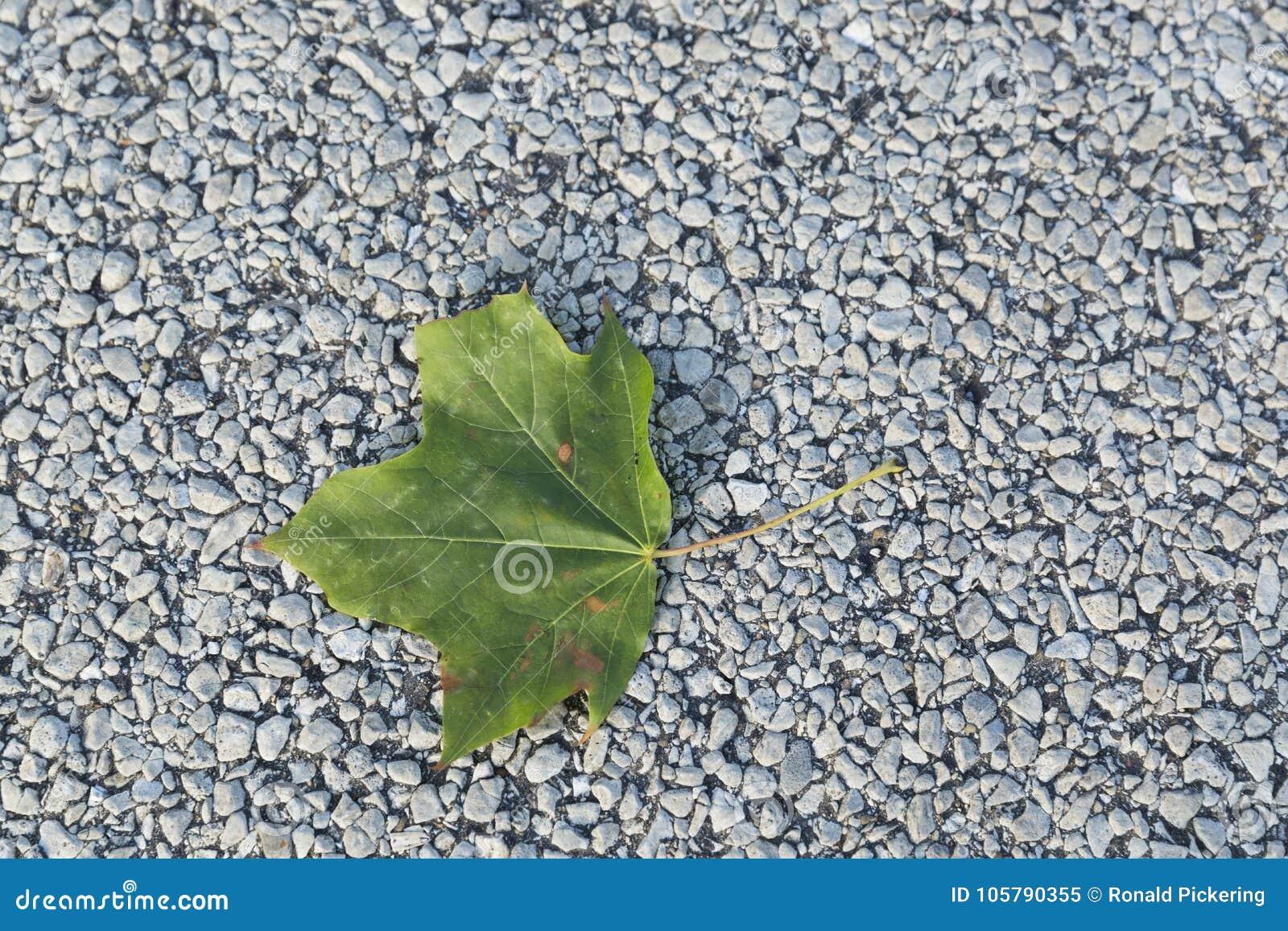 Ενιαίο πράσινο φύλλο του καλοκαιριού στο πεζοδρόμιο