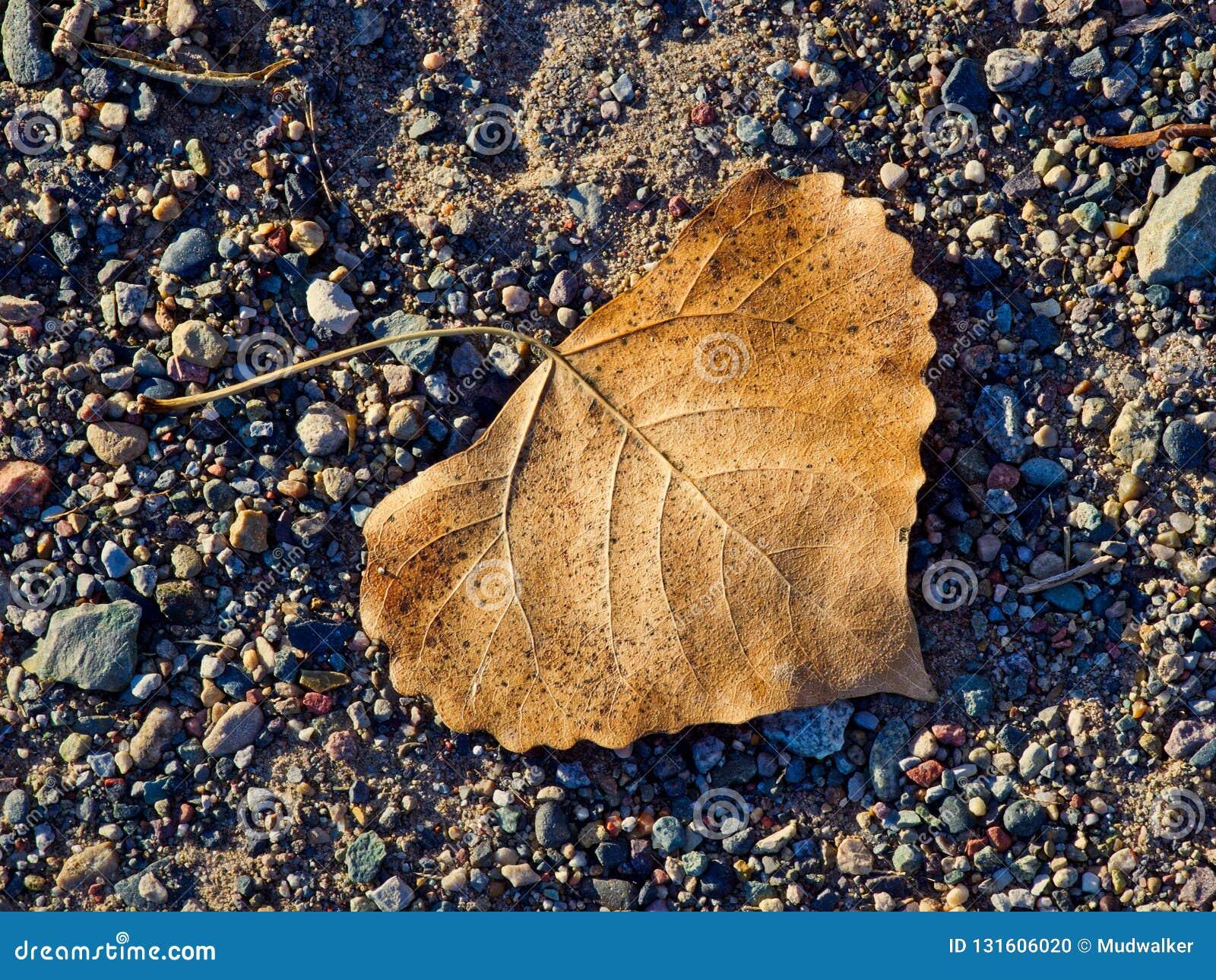 Ενιαίο φύλλο στο αμμοχάλικο