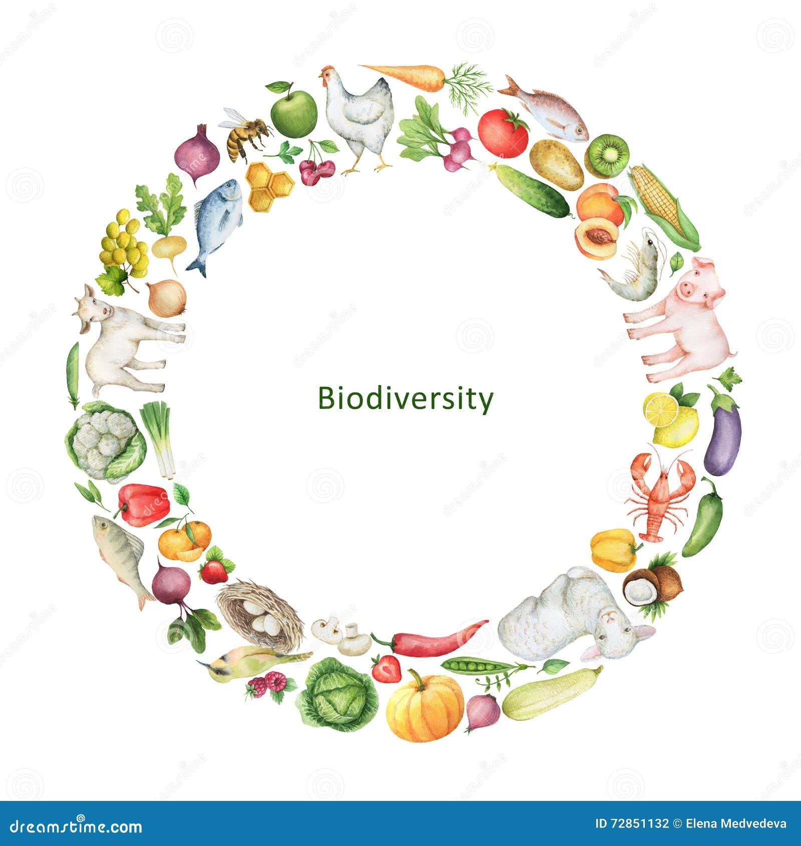 Εννοιολογική απεικόνιση βιοποικιλότητας Watercolor των υγιών τροφίμων
