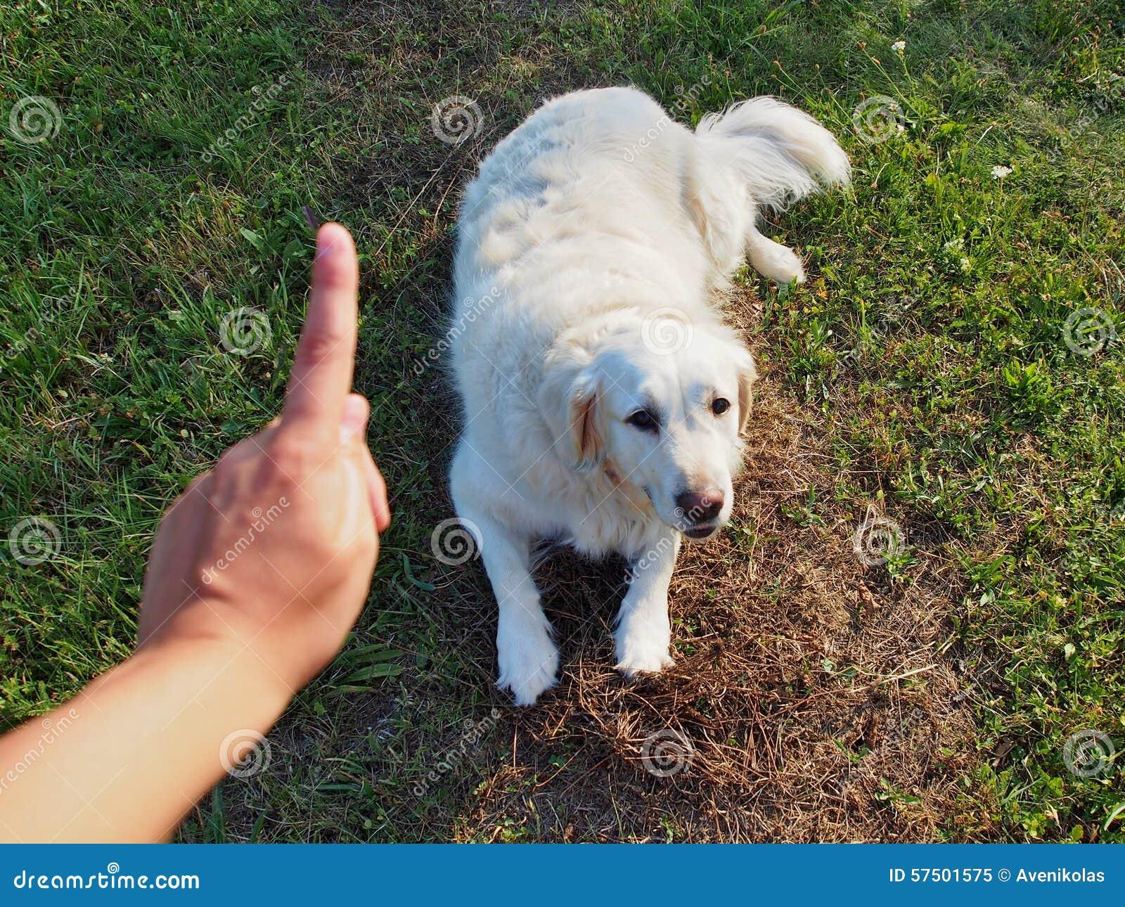 Εντολή σκυλιών: Παραμονή
