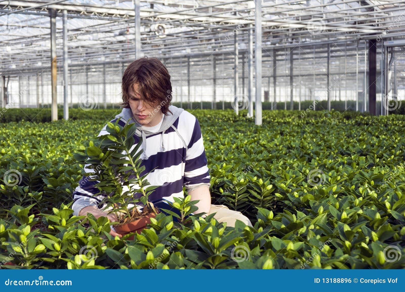 Εξέταση των σε δοχείο φυτών