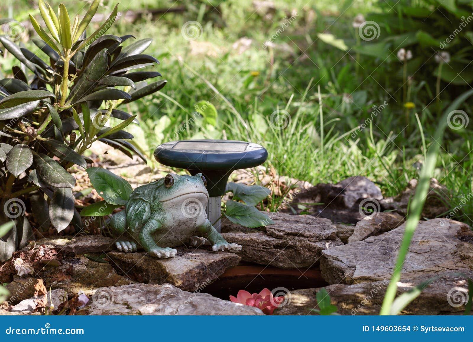 Εξωραϊσμός, βάτραχος κοντά σε μια μικρή λίμνη με τις πέτρες στο υπόβαθρο των εγκαταστάσεων στον κήπο