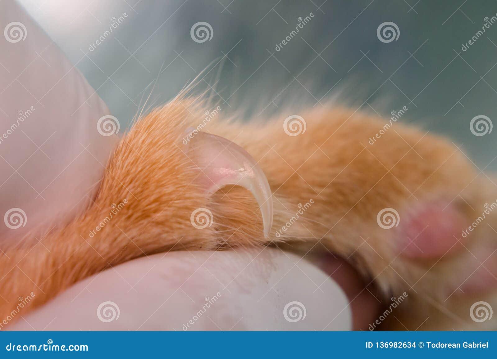 Εξωτερικευμένο καρφί μιας γάτας